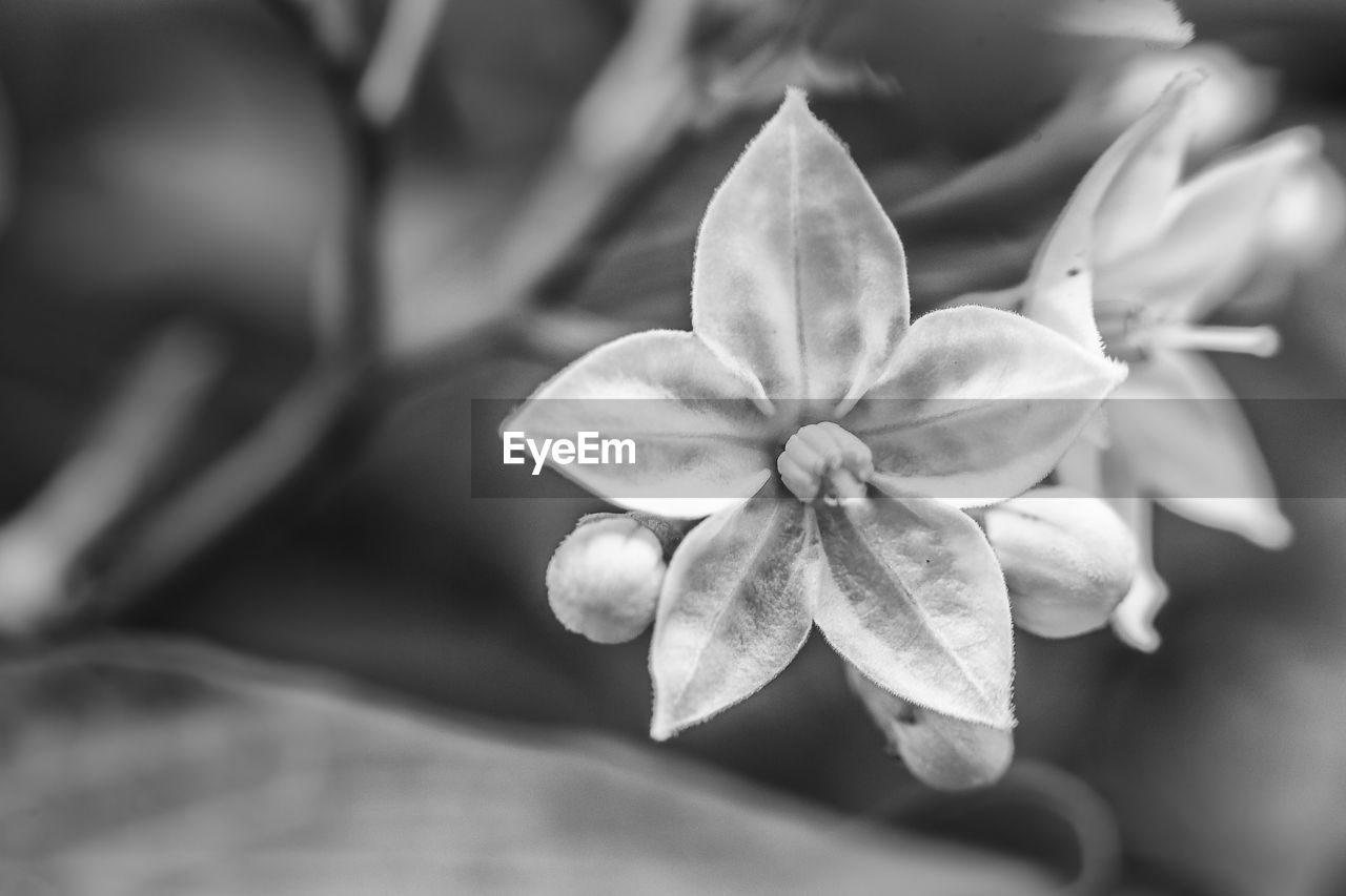 petal, flower, growth, no people, close-up, flower head, focus on foreground, nature, fragility, day, beauty in nature, outdoors, freshness, frangipani, periwinkle