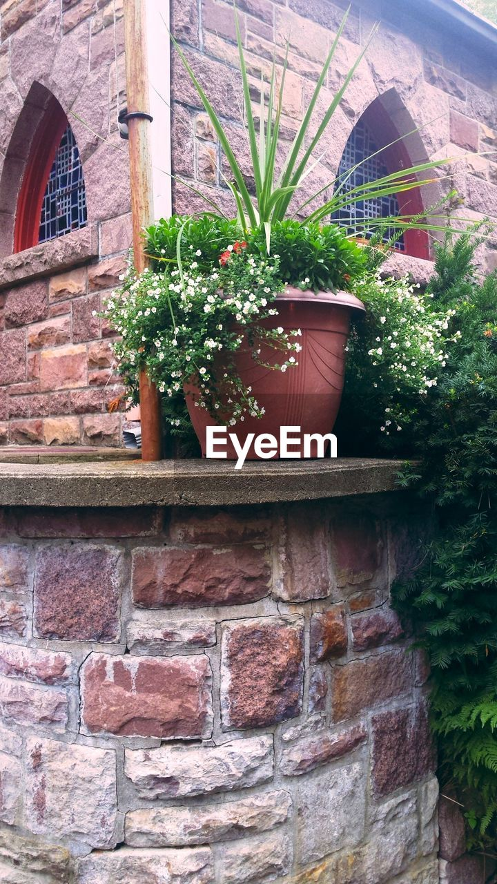 potted plant, building exterior, growth, plant, architecture, built structure, brick wall, house, outdoors, day, no people, nature, window box, flower