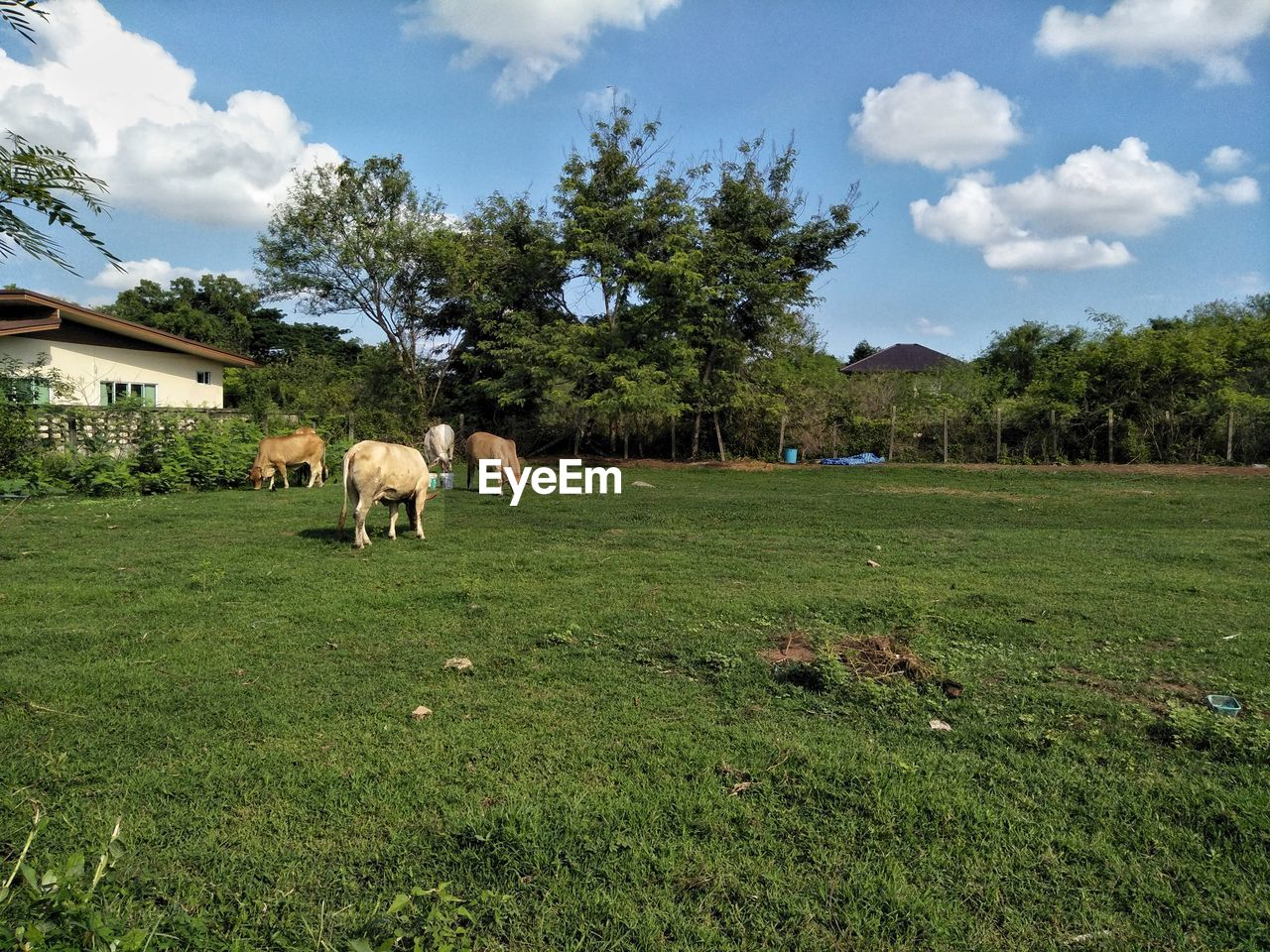 mammal, domestic, domestic animals, plant, animal, animal themes, livestock, grass, pets, vertebrate, cloud - sky, field, land, tree, sky, nature, group of animals, built structure, grazing, green color, no people, herbivorous, outdoors