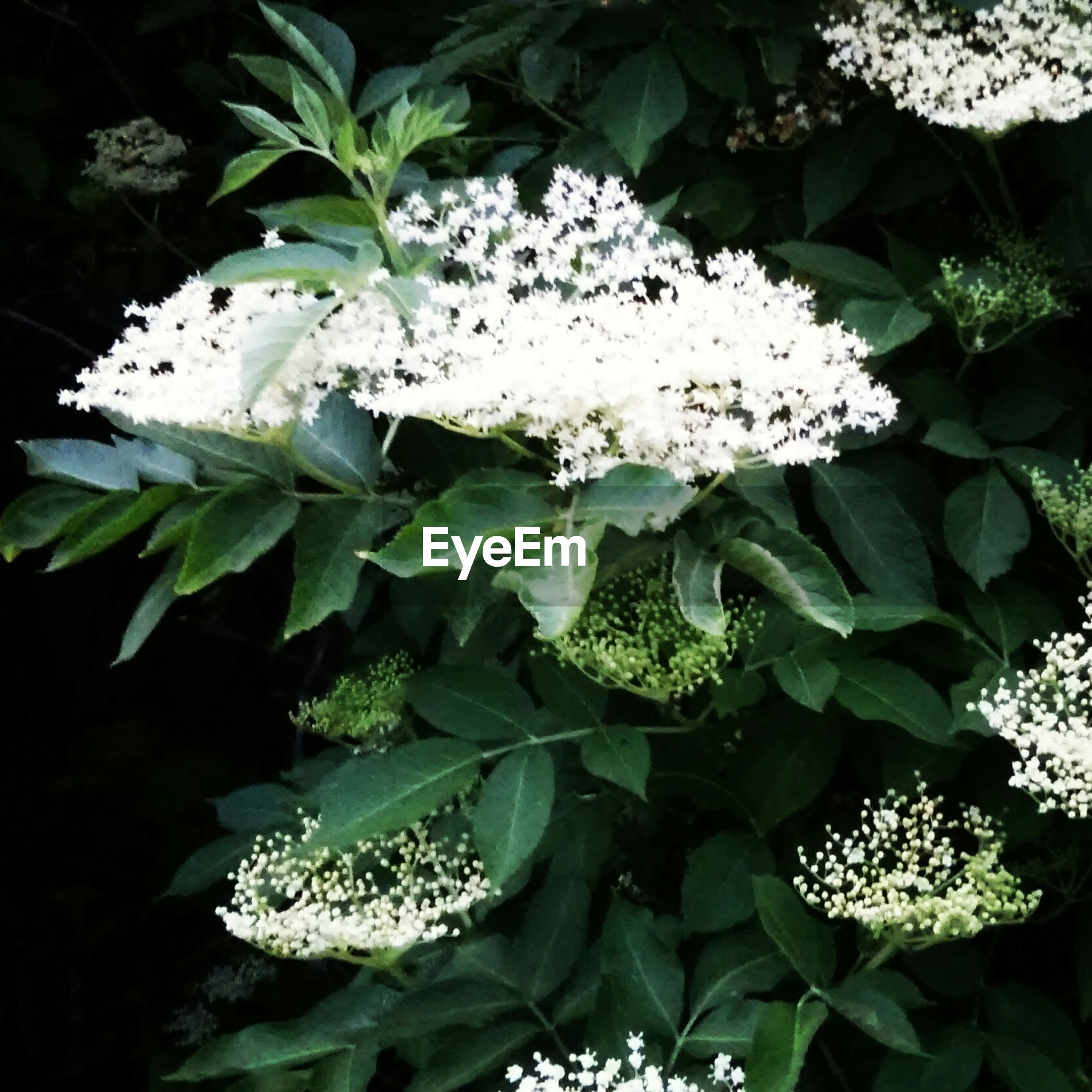 flower, freshness, growth, fragility, leaf, white color, petal, beauty in nature, flower head, plant, nature, blooming, close-up, green color, in bloom, blossom, high angle view, botany, white, no people