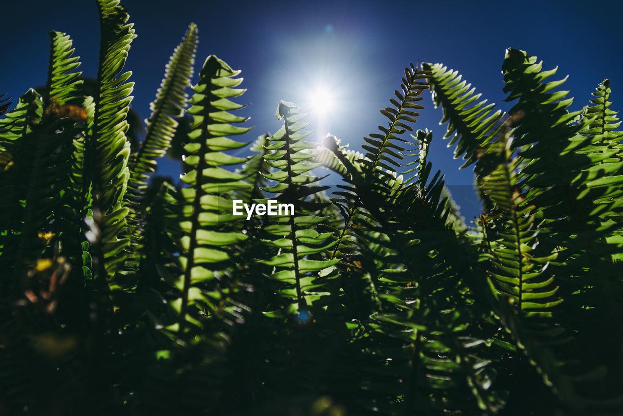 LOW ANGLE VIEW OF SUN SHINING THROUGH TREE