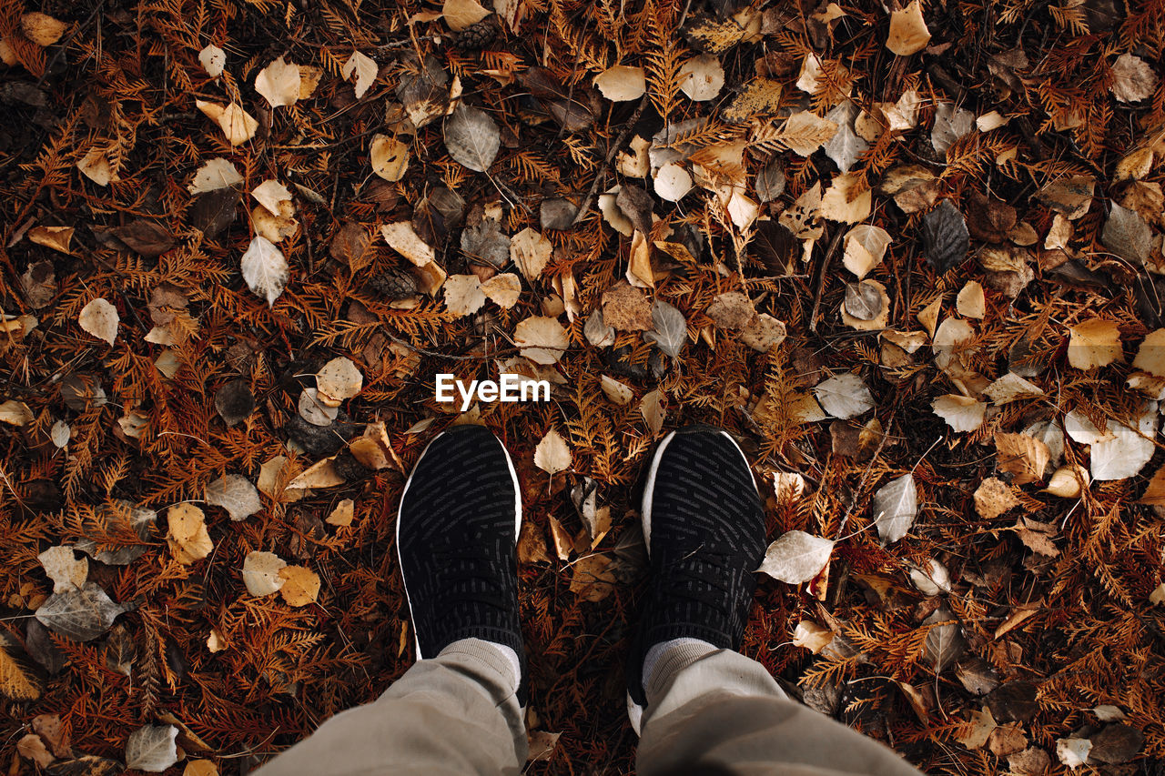 low section, leaf, human leg, plant part, shoe, autumn, personal perspective, real people, one person, dry, body part, human body part, change, standing, leaves, high angle view, directly above, lifestyles, land, day, outdoors, human foot, jeans, human limb, dried, fall