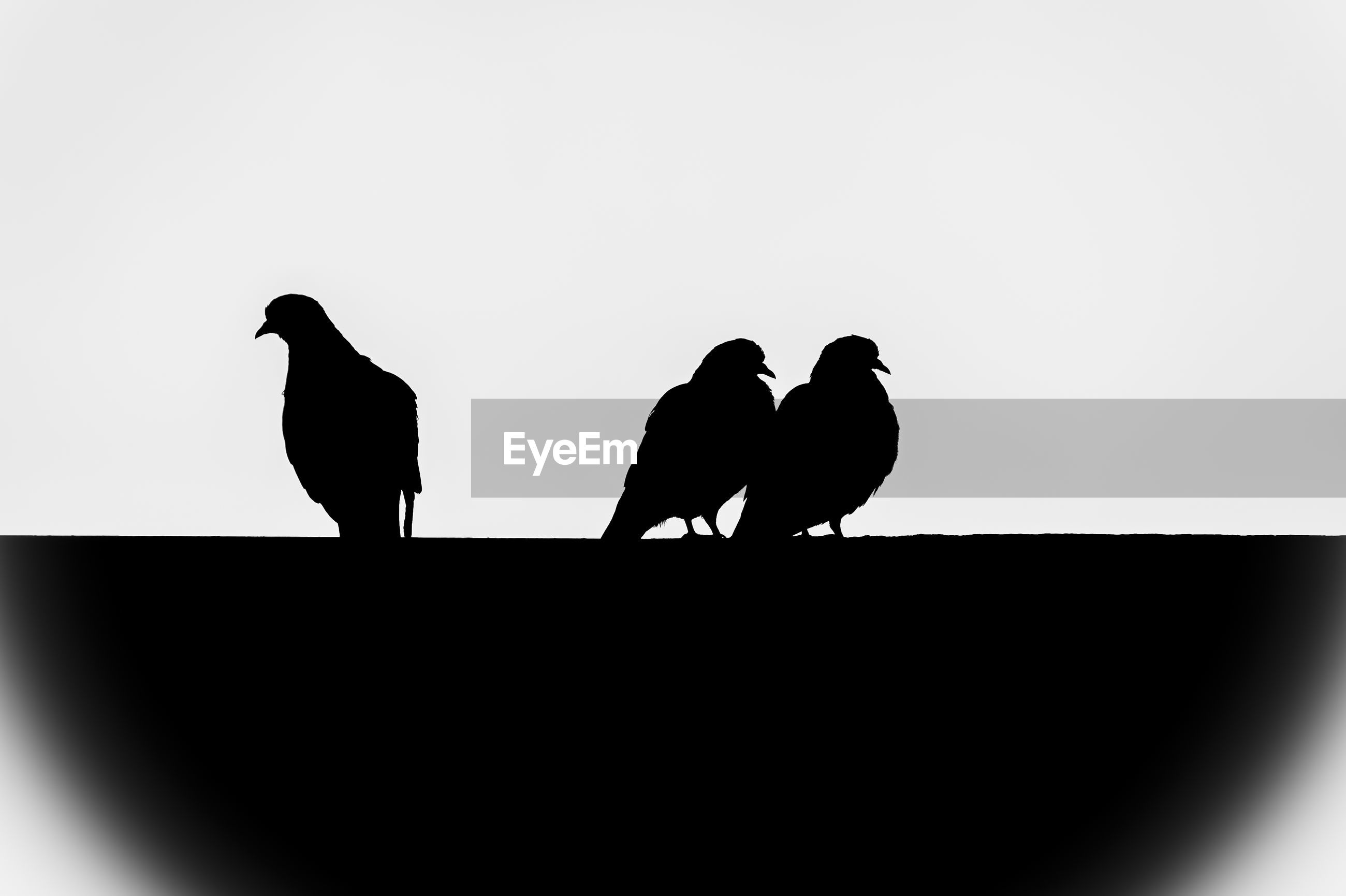 Low angle view of silhouette birds against clear sky