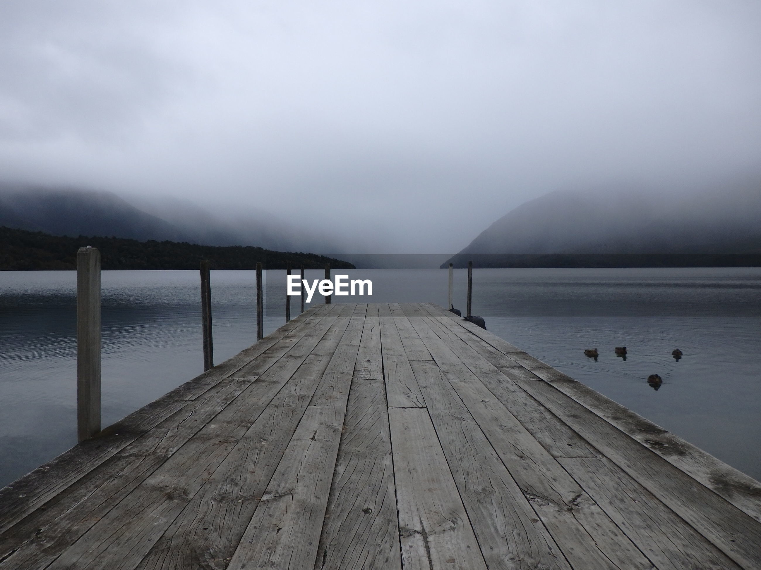 weather, pier, water, nature, jetty, tranquility, tranquil scene, scenics, outdoors, fog, beauty in nature, lake, sky, wood - material, mountain, day, no people, wood paneling, animal themes, bird