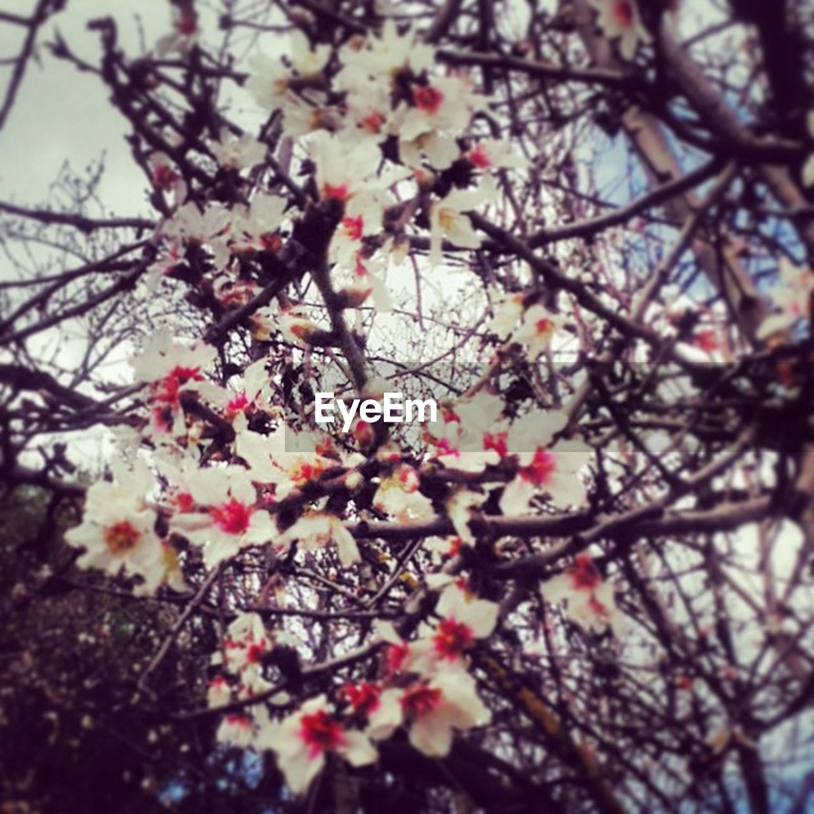 branch, flower, tree, growth, low angle view, freshness, beauty in nature, nature, fragility, pink color, blossom, cherry tree, twig, cherry blossom, focus on foreground, close-up, sky, outdoors, no people, springtime