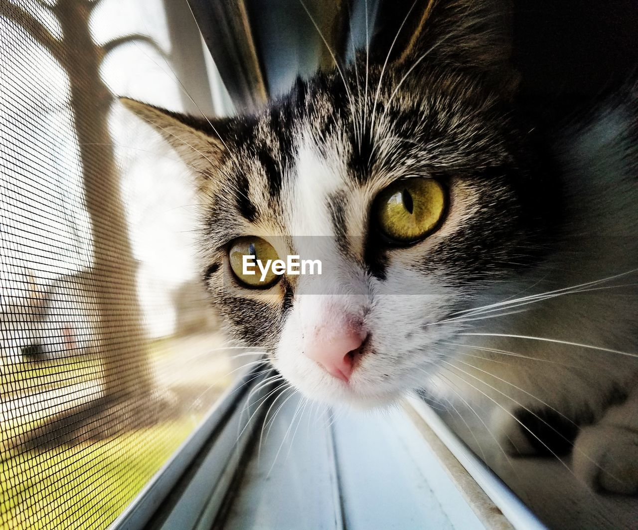 domestic cat, domestic animals, feline, pets, mammal, animal themes, one animal, whisker, looking at camera, portrait, close-up, indoors, no people, day, yellow eyes