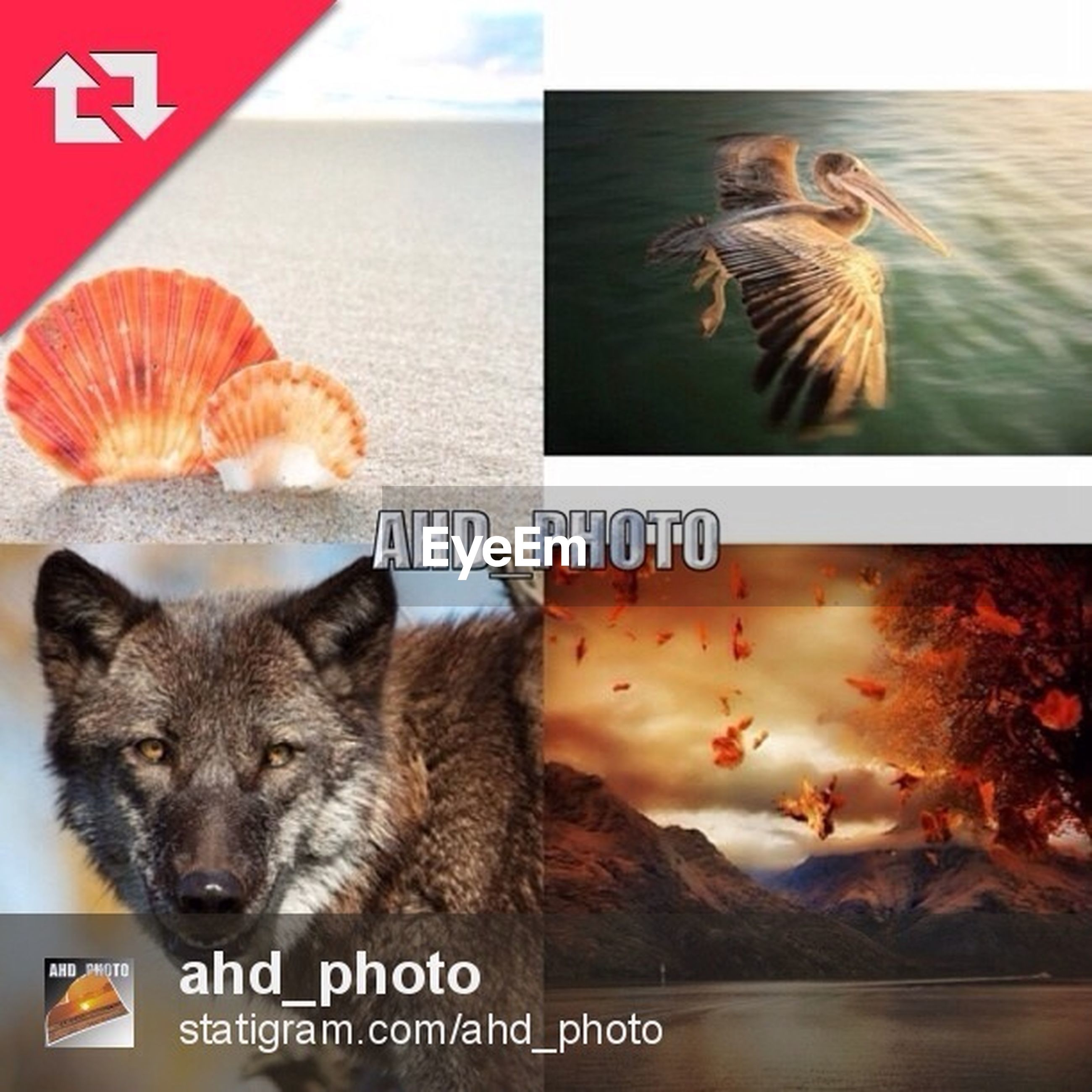 animal themes, text, western script, two animals, domestic animals, communication, indoors, one animal, bird, wildlife, animals in the wild, pets, auto post production filter, togetherness, three animals, mammal, transfer print, domestic cat, no people, full length
