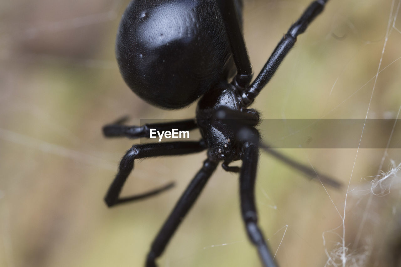 one animal, insect, animal themes, animals in the wild, close-up, animal wildlife, black color, no people, focus on foreground, day, outdoors, nature