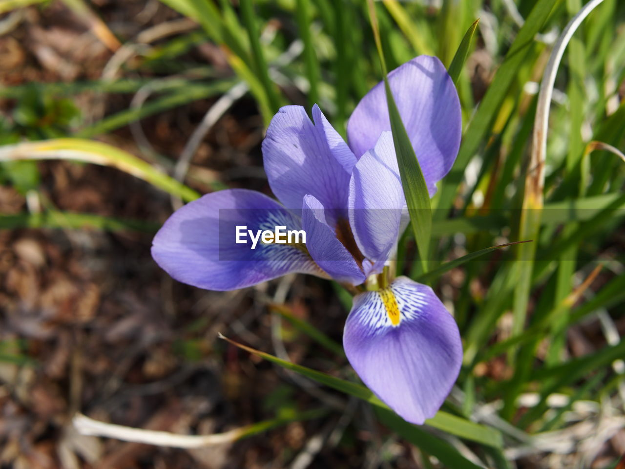flower, petal, beauty in nature, nature, purple, fragility, growth, freshness, flower head, plant, blooming, crocus, day, no people, outdoors, close-up