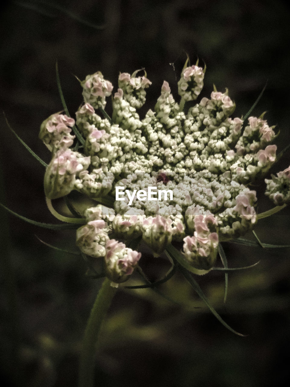 flower, nature, growth, no people, plant, fragility, close-up, beauty in nature, day, freshness, flower head, outdoors