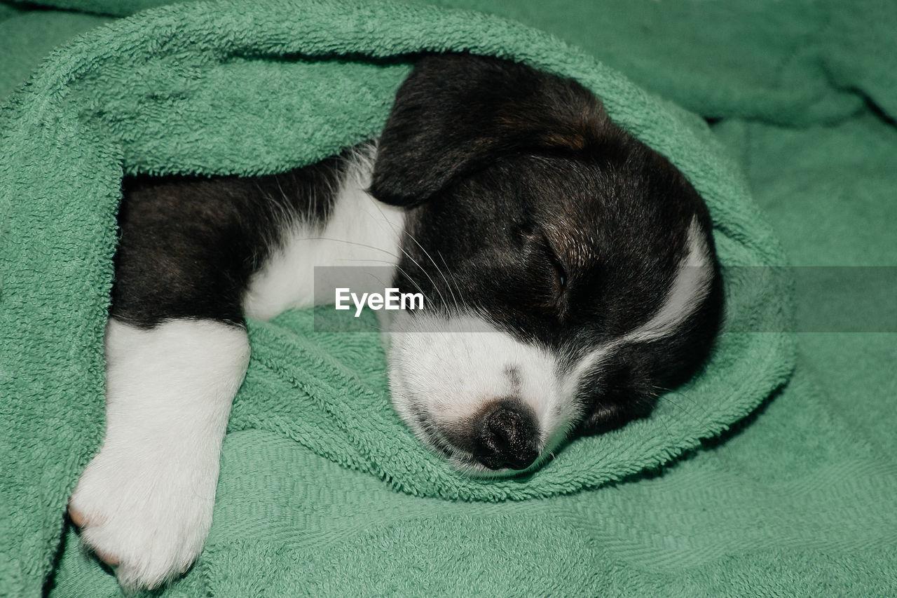 HIGH ANGLE VIEW OF A DOG SLEEPING