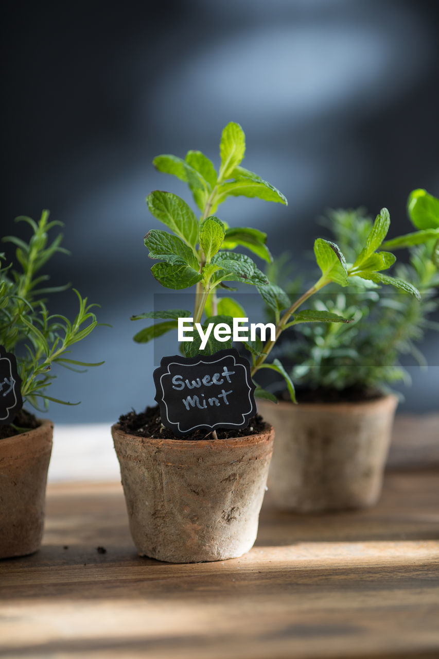 potted plant, growth, plant, leaf, nature, plant part, wood - material, green color, no people, selective focus, text, day, close-up, outdoors, beauty in nature, container, freshness, botany, focus on foreground, flower pot, herb, gardening, small, houseplant