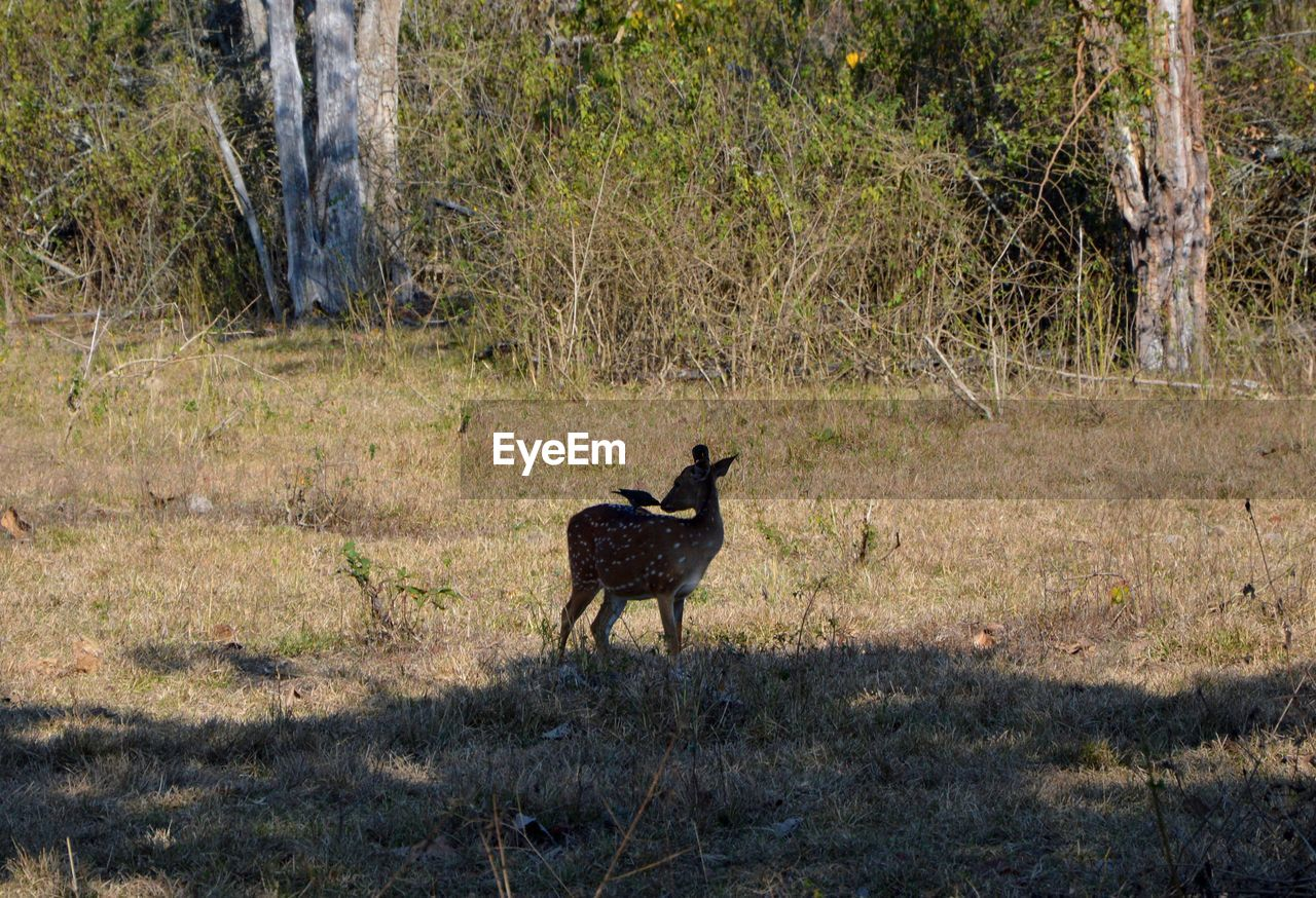 animal wildlife, animals in the wild, one animal, animal themes, grass, nature, no people, day, outdoors, mammal, forest, tree