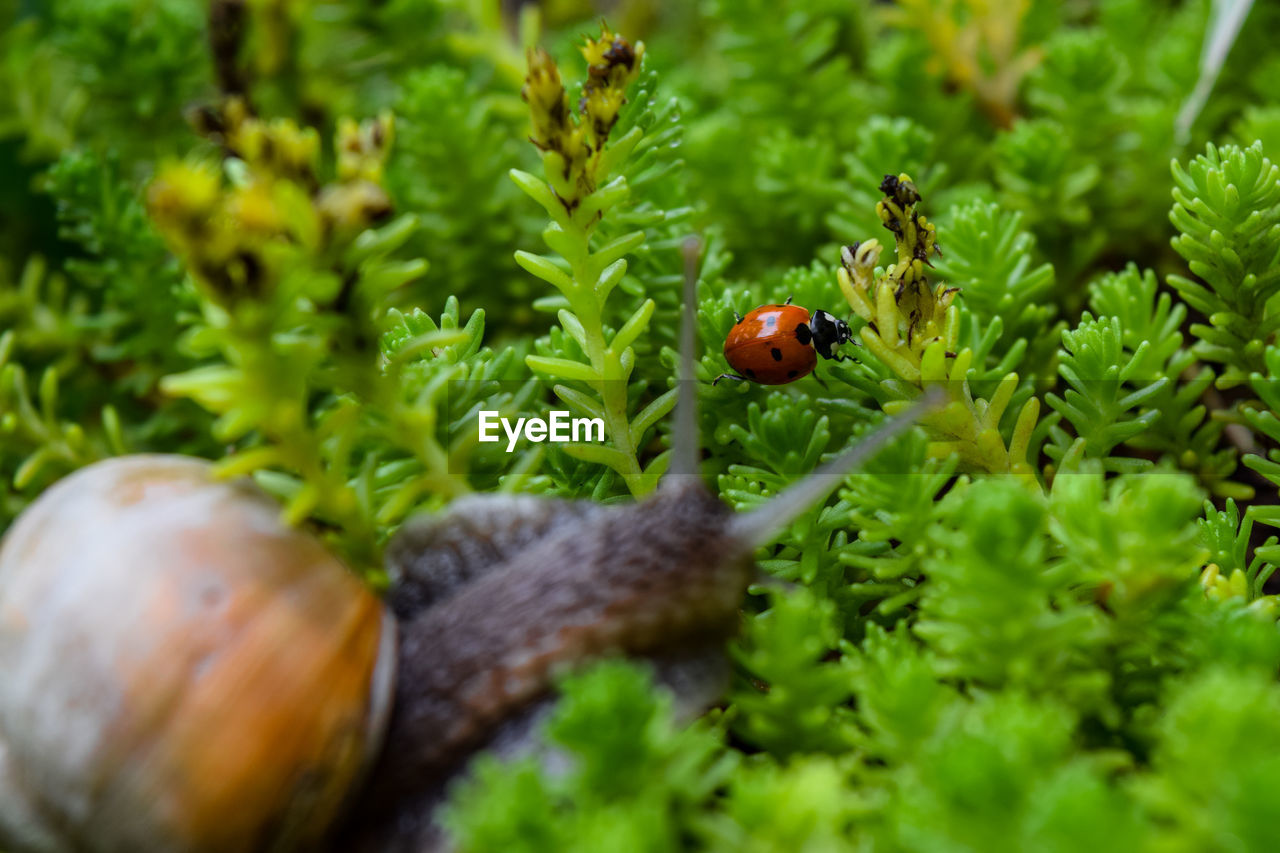 animal wildlife, animal themes, animal, invertebrate, green color, animals in the wild, plant, selective focus, one animal, close-up, insect, growth, no people, nature, beetle, day, ladybug, beauty in nature, fragility