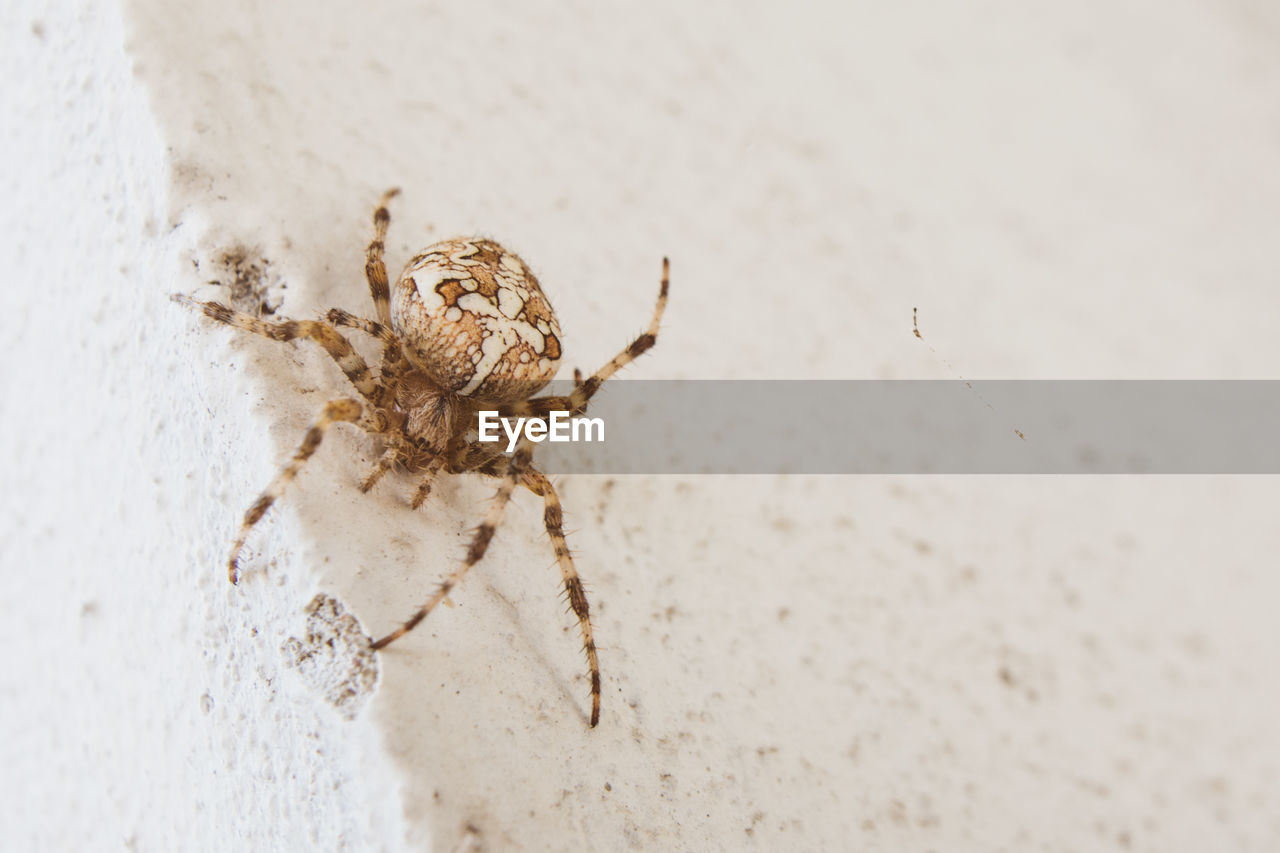 Close-up of spider on white wall