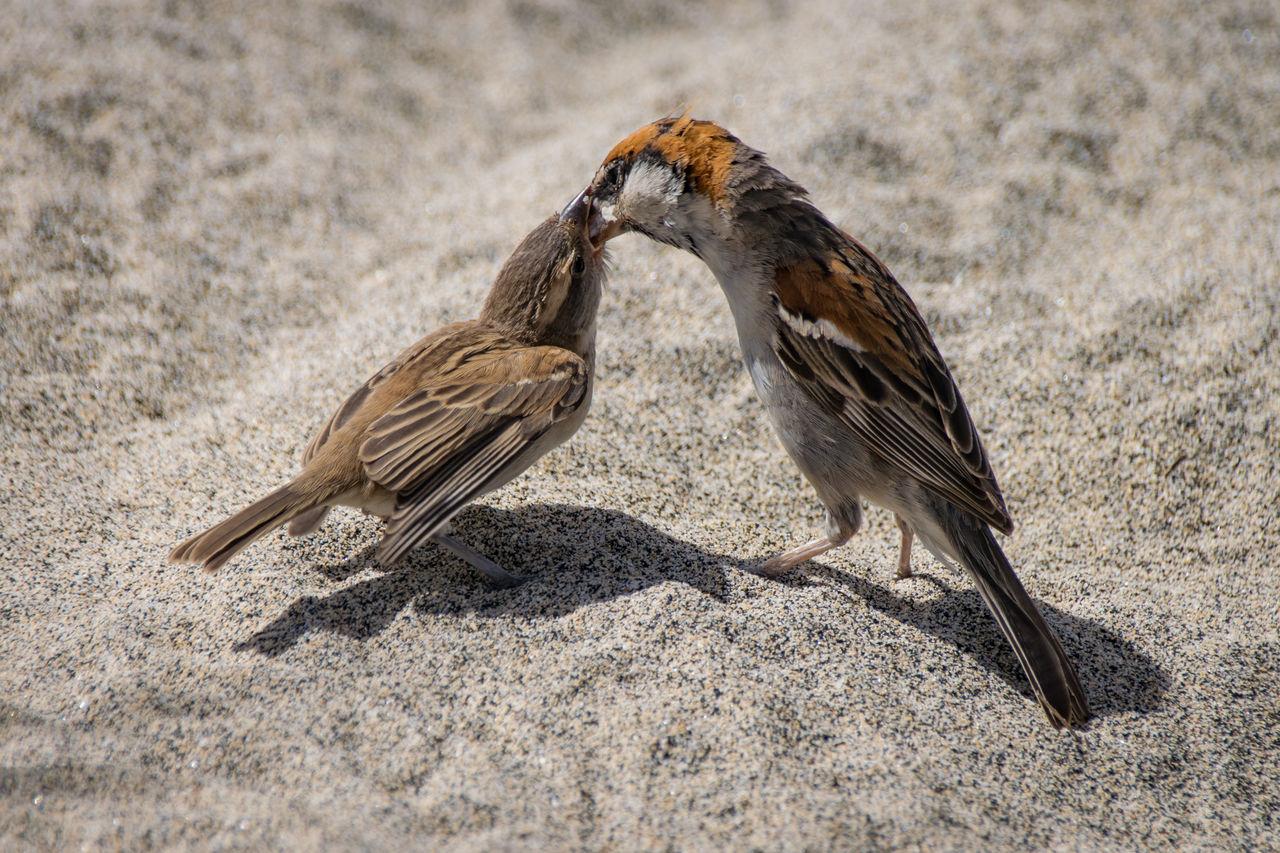 Close-Up Of Birds Feeding On Sand At Beach