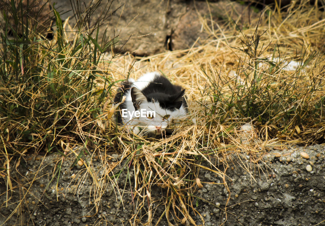 animal themes, animal, mammal, one animal, vertebrate, domestic, pets, domestic animals, domestic cat, plant, cat, nature, no people, feline, land, field, grass, day, young animal, outdoors