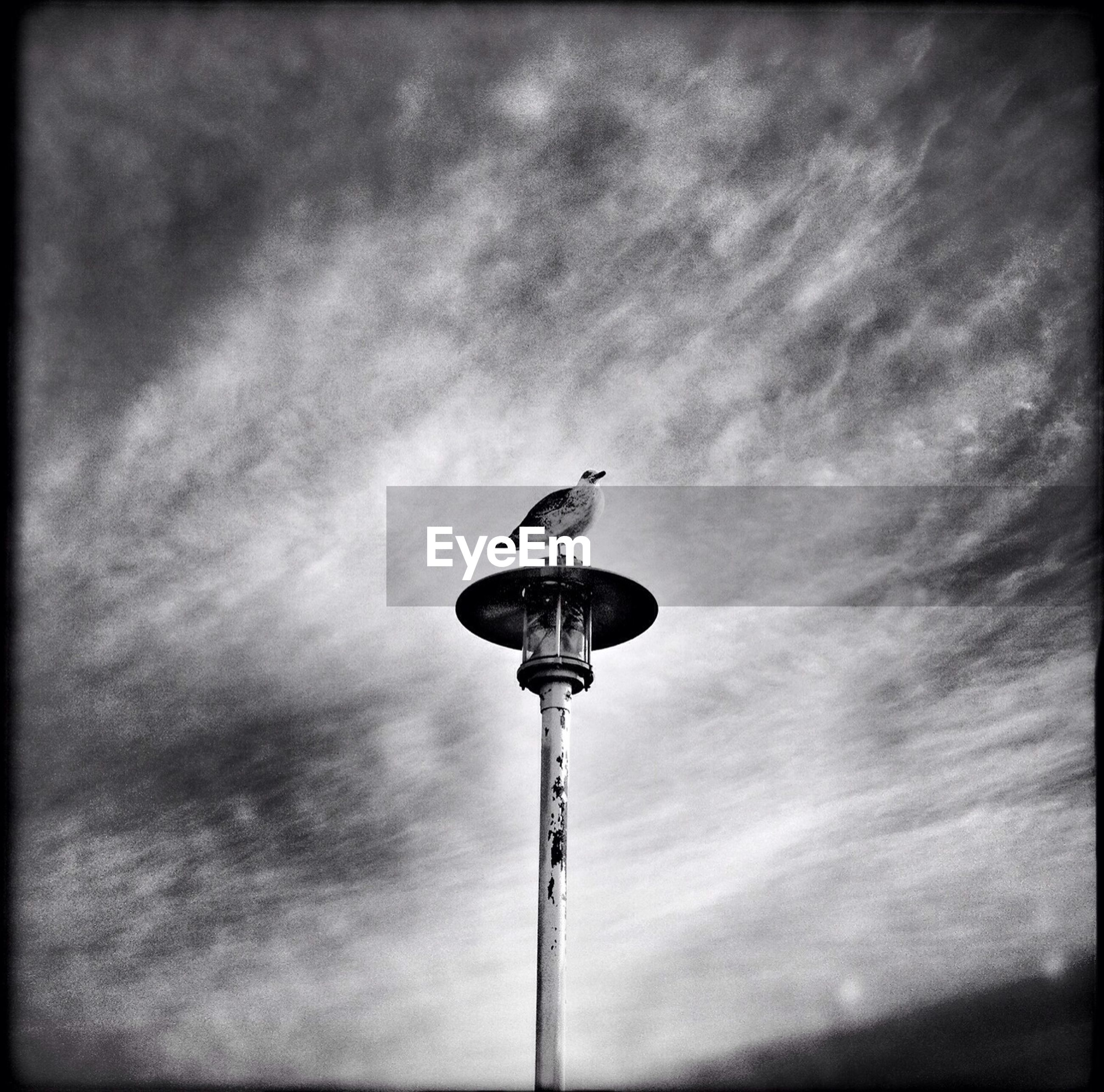 Low angle view of bird on street light against cloudy sky