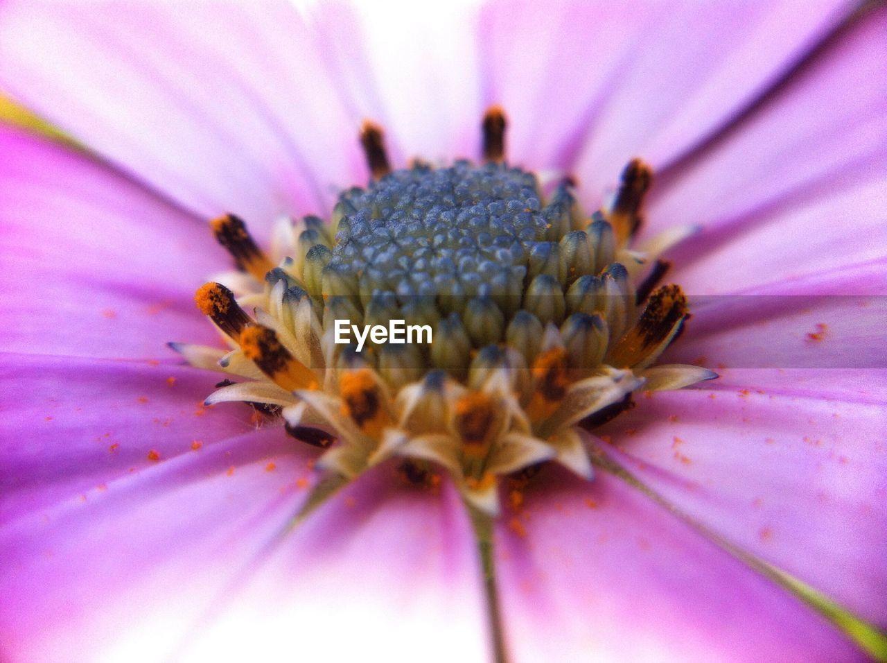 Close-up full frame of pink flower