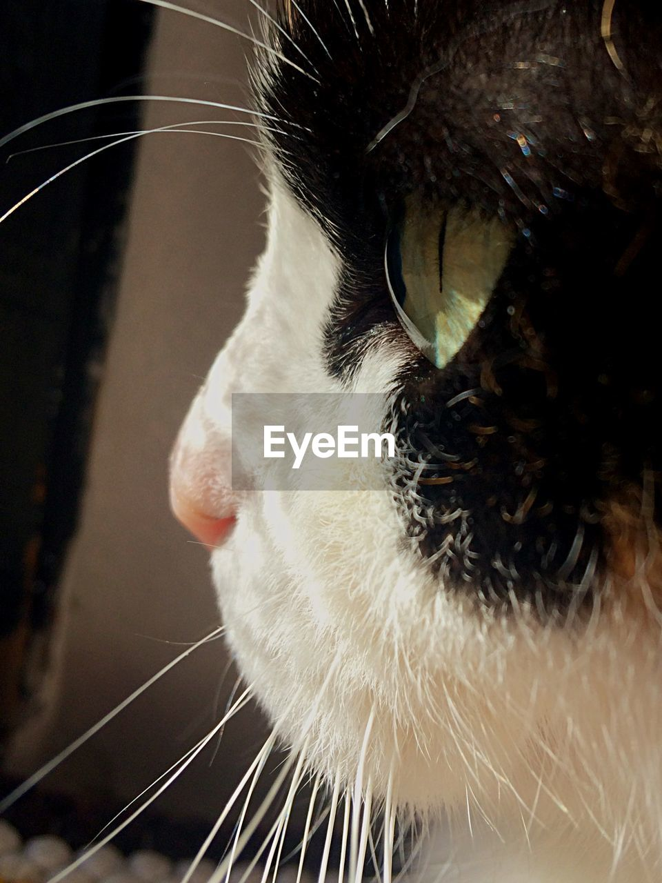 domestic cat, feline, pets, one animal, domestic animals, animal themes, cat, whisker, mammal, indoors, close-up, no people, day