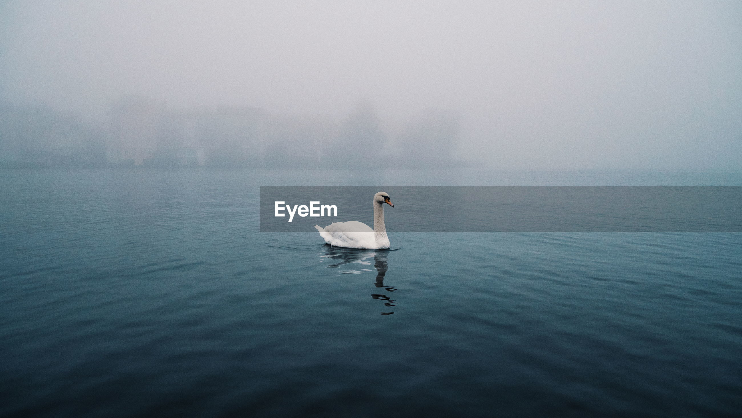 Swan swimming in lake against sky