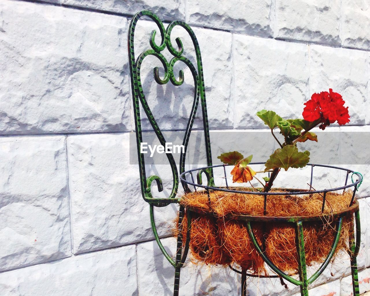 Red Flowers Blooming On Metal Chair Against Stone Wall