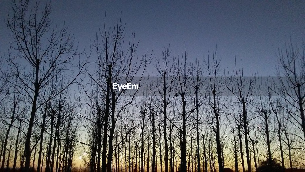 bare tree, nature, tranquility, tree, no people, beauty in nature, scenics, forest, outdoors, winter, landscape, sky, day