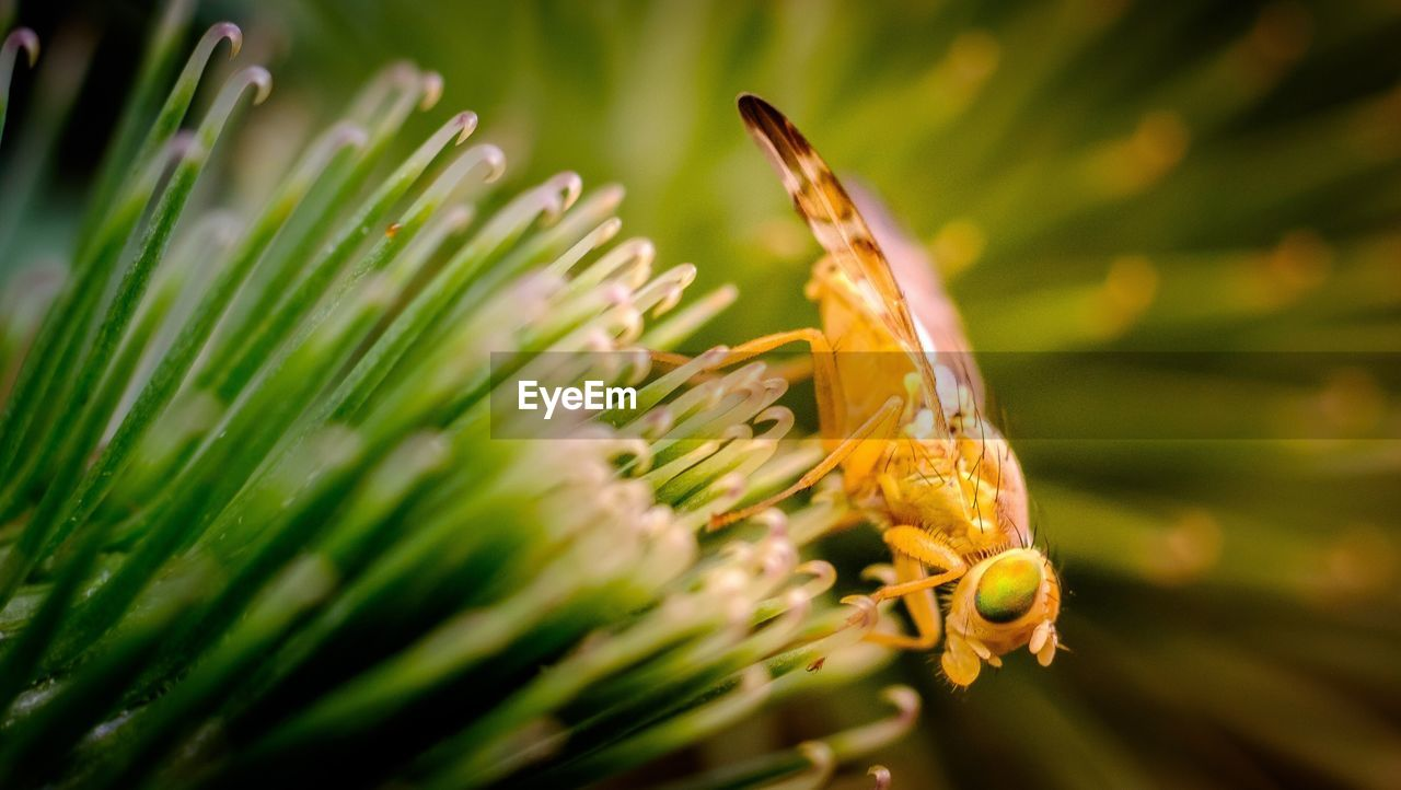 one animal, nature, plant, green color, animals in the wild, close-up, growth, animal themes, no people, flower, insect, beauty in nature, animal wildlife, outdoors, focus on foreground, day, fragility, freshness, flower head