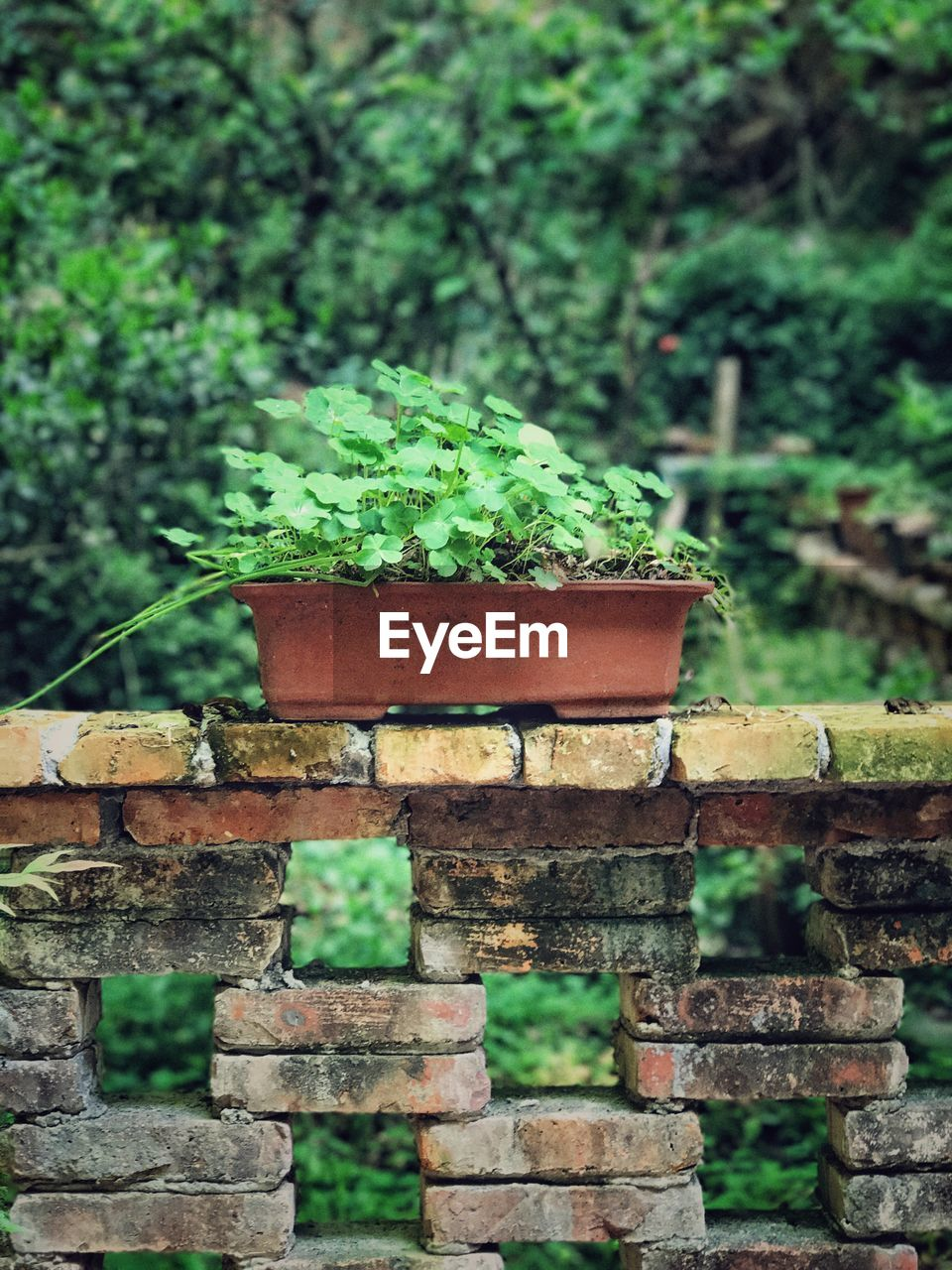 plant, day, green color, growth, nature, focus on foreground, no people, outdoors, wood - material, close-up, wall, land, selective focus, built structure, tree, brick, architecture, front or back yard, beauty in nature, brick wall