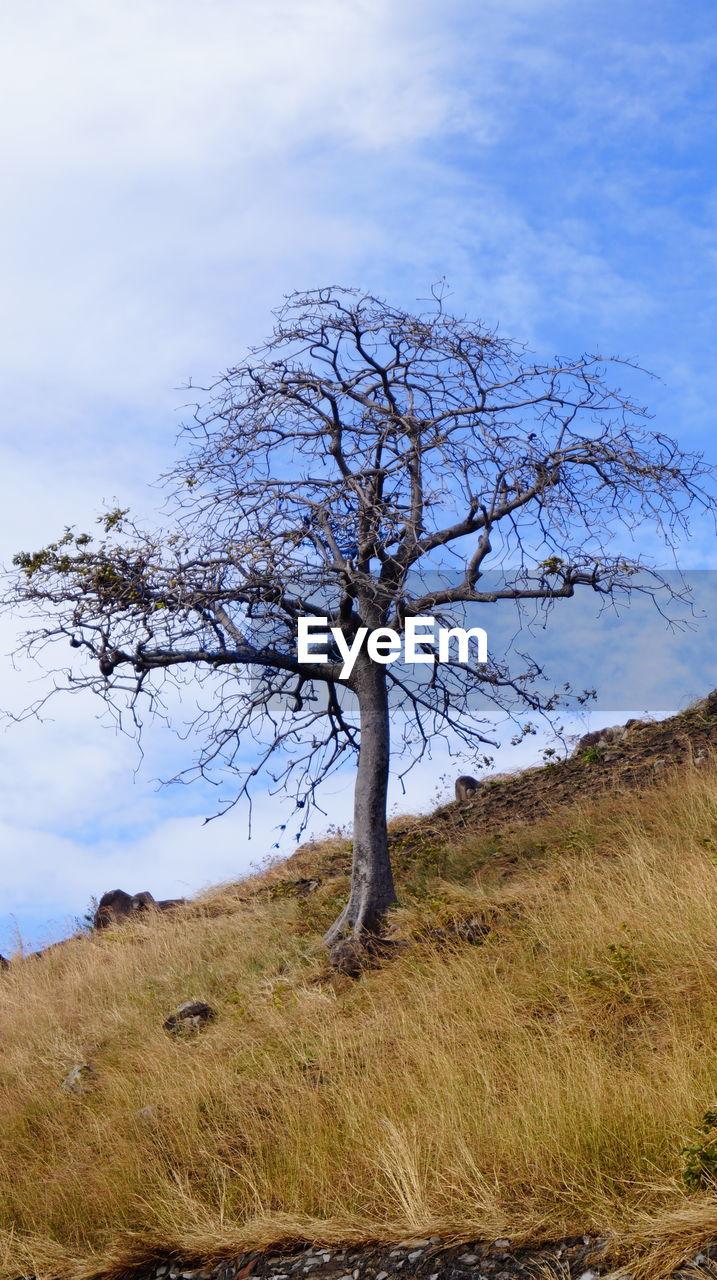 BARE TREE ON FIELD