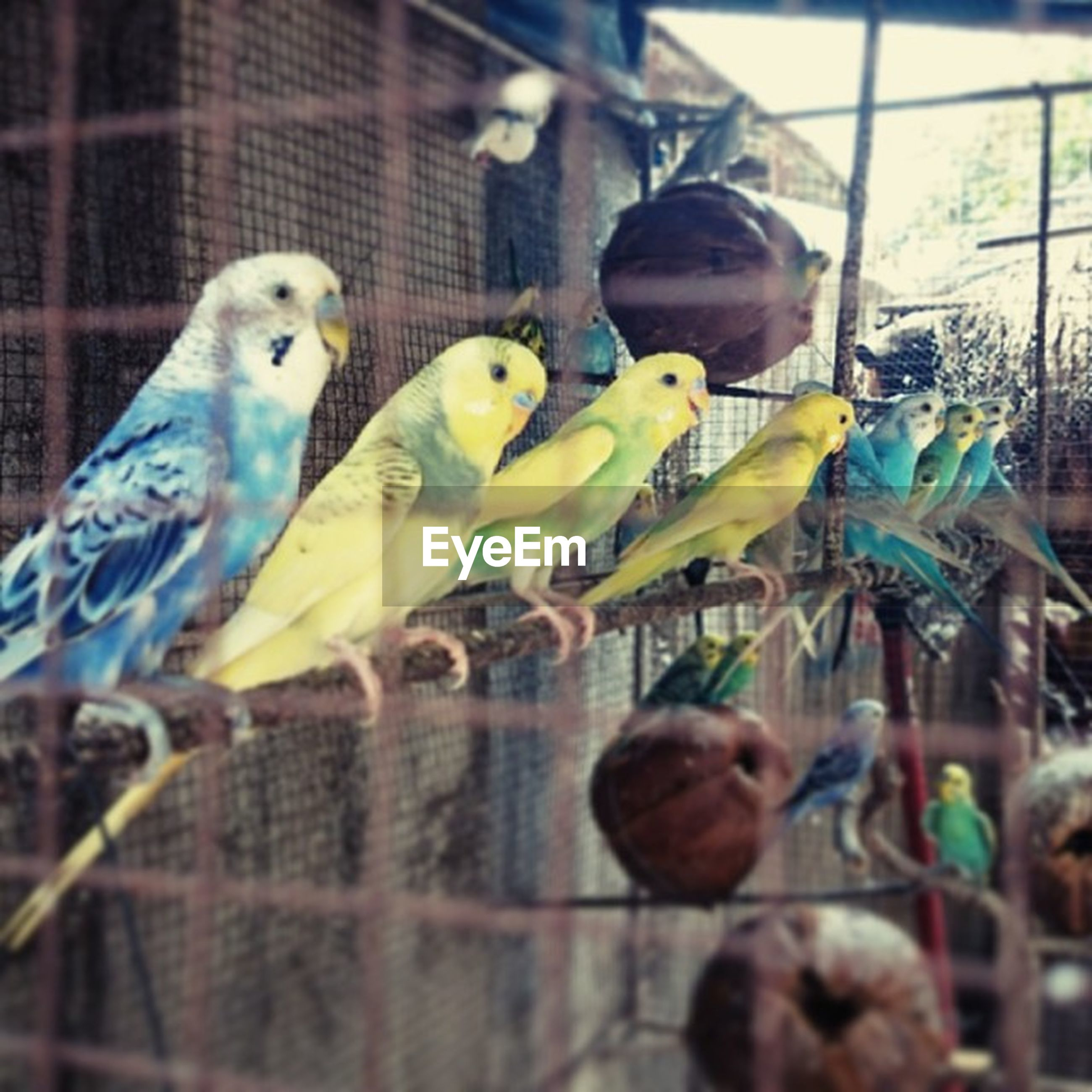 animal themes, bird, wildlife, focus on foreground, animals in the wild, one animal, parrot, two animals, childhood, toy, animals in captivity, cage, indoors, close-up, day, selective focus, perching, holding