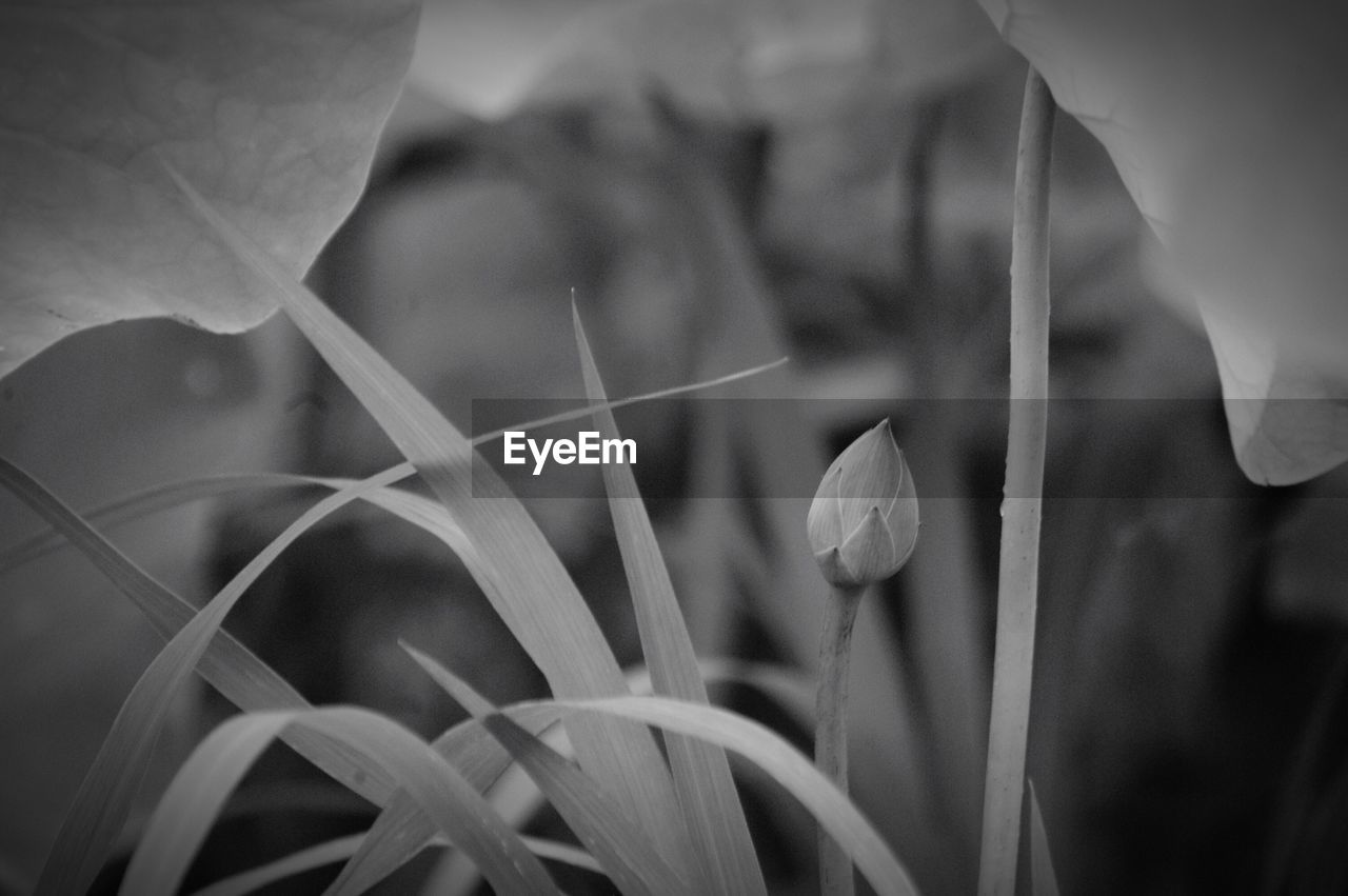 growth, nature, flower, beauty in nature, plant, fragility, petal, close-up, no people, day, focus on foreground, outdoors, flower head, freshness, blooming, leaf