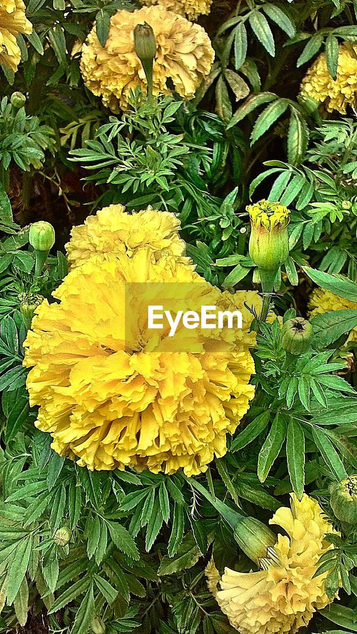 flower, yellow, freshness, nature, growth, petal, beauty in nature, fragility, plant, flower head, no people, outdoors, leaf, close-up, blooming, day