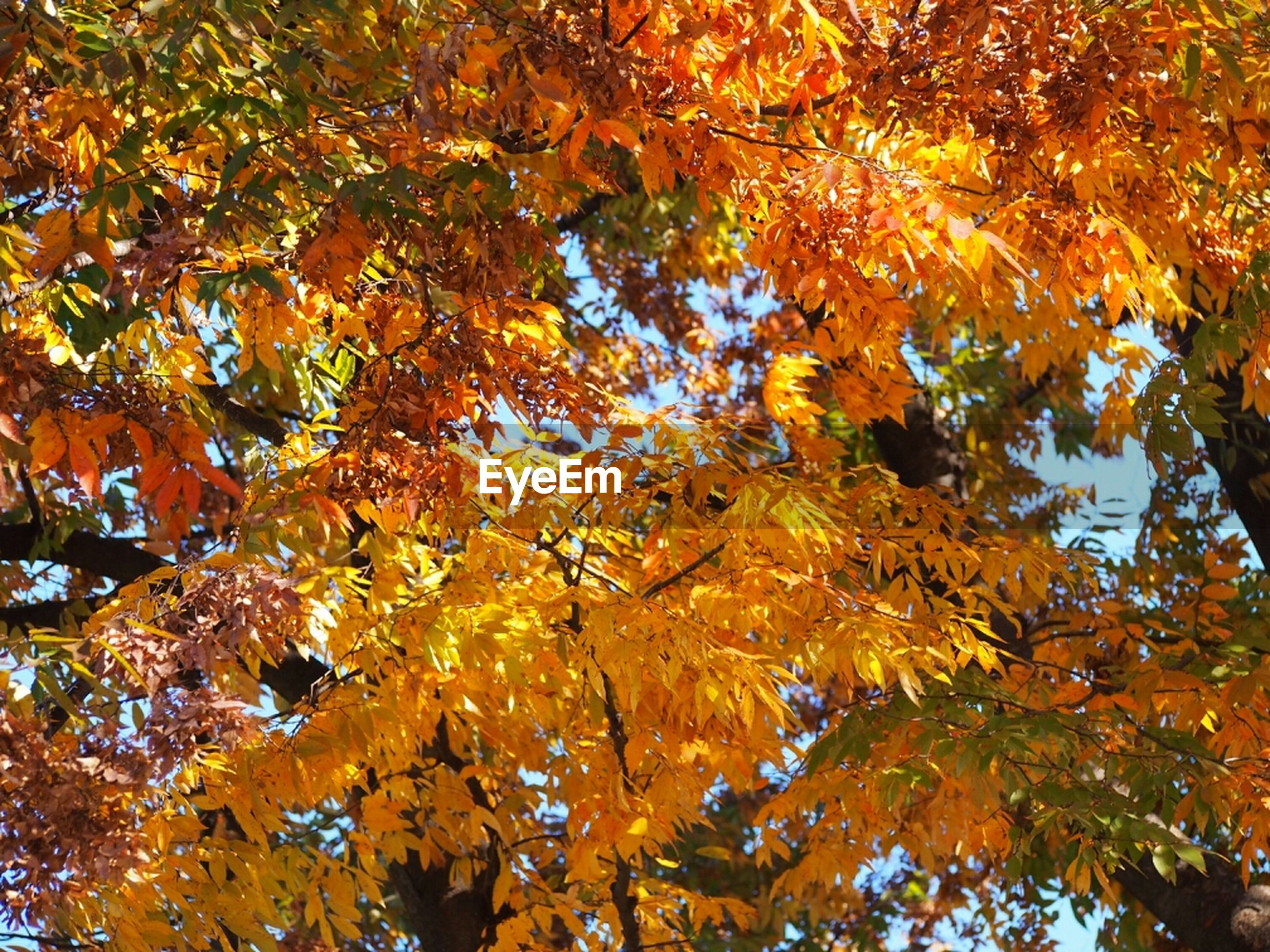 Close-up of autumn tree