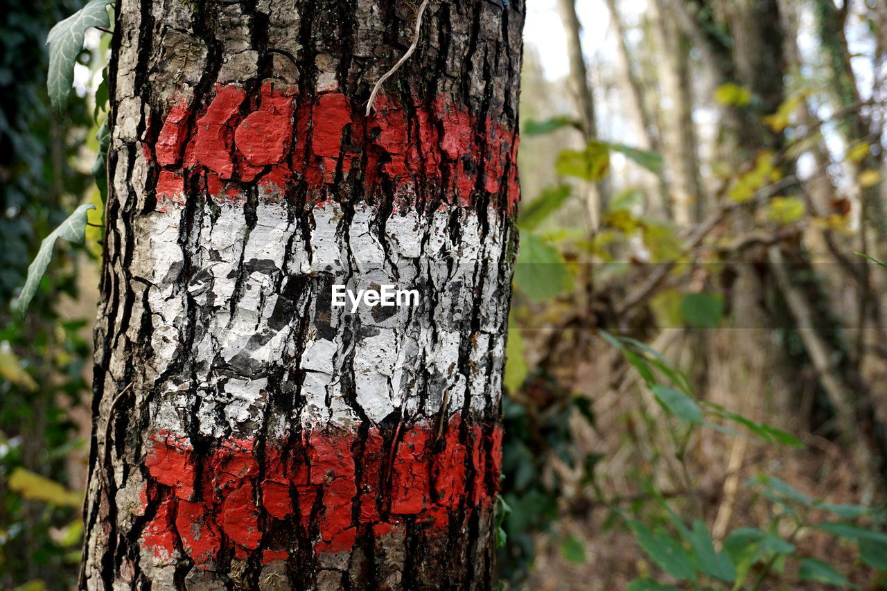tree trunk, tree, focus on foreground, day, rough, no people, textured, outdoors, nature, growth, close-up, bark, red, marking