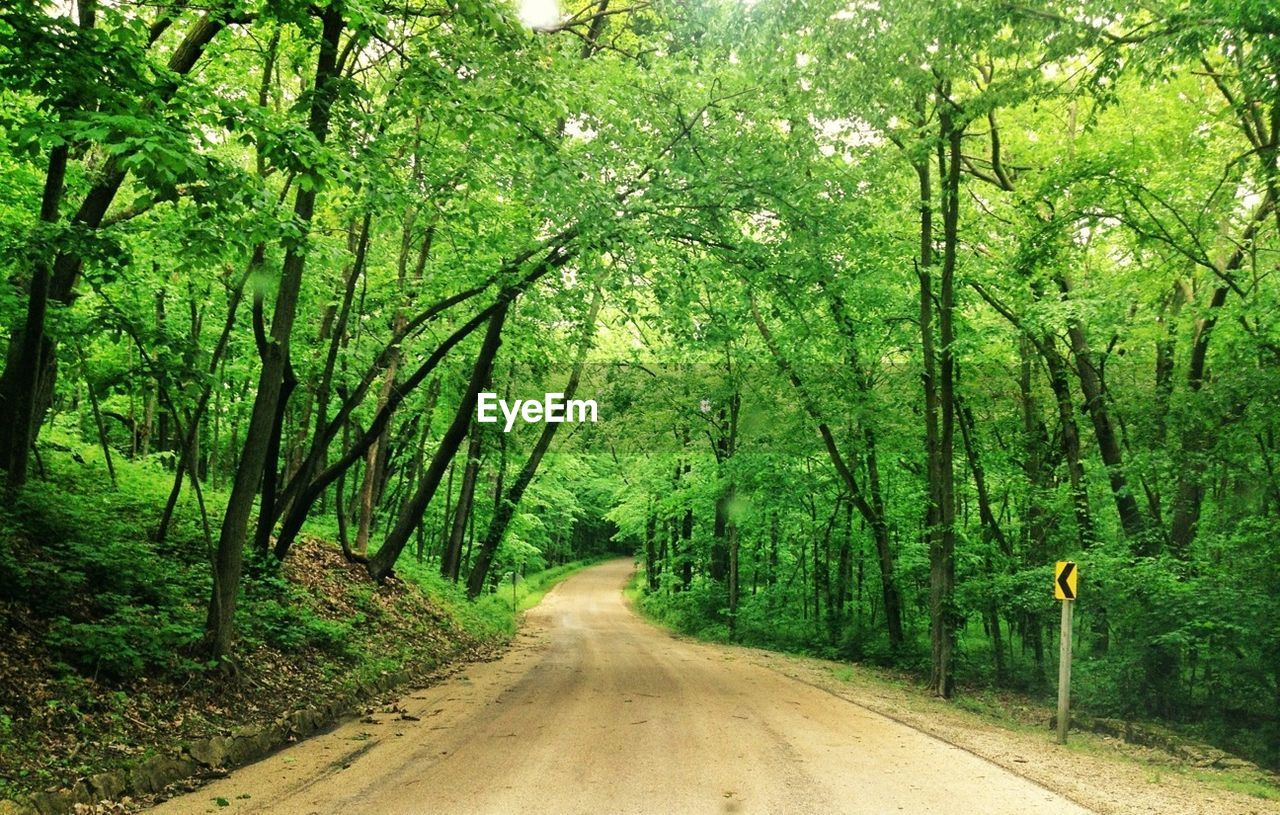 Empty Road In Green Forest