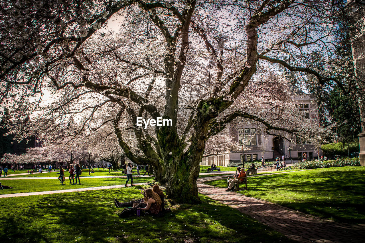 tree, blossom, flower, branch, grass, nature, beauty in nature, growth, architecture, building exterior, springtime, outdoors, built structure, green color, day, sky, scenics, no people, freshness, animal themes