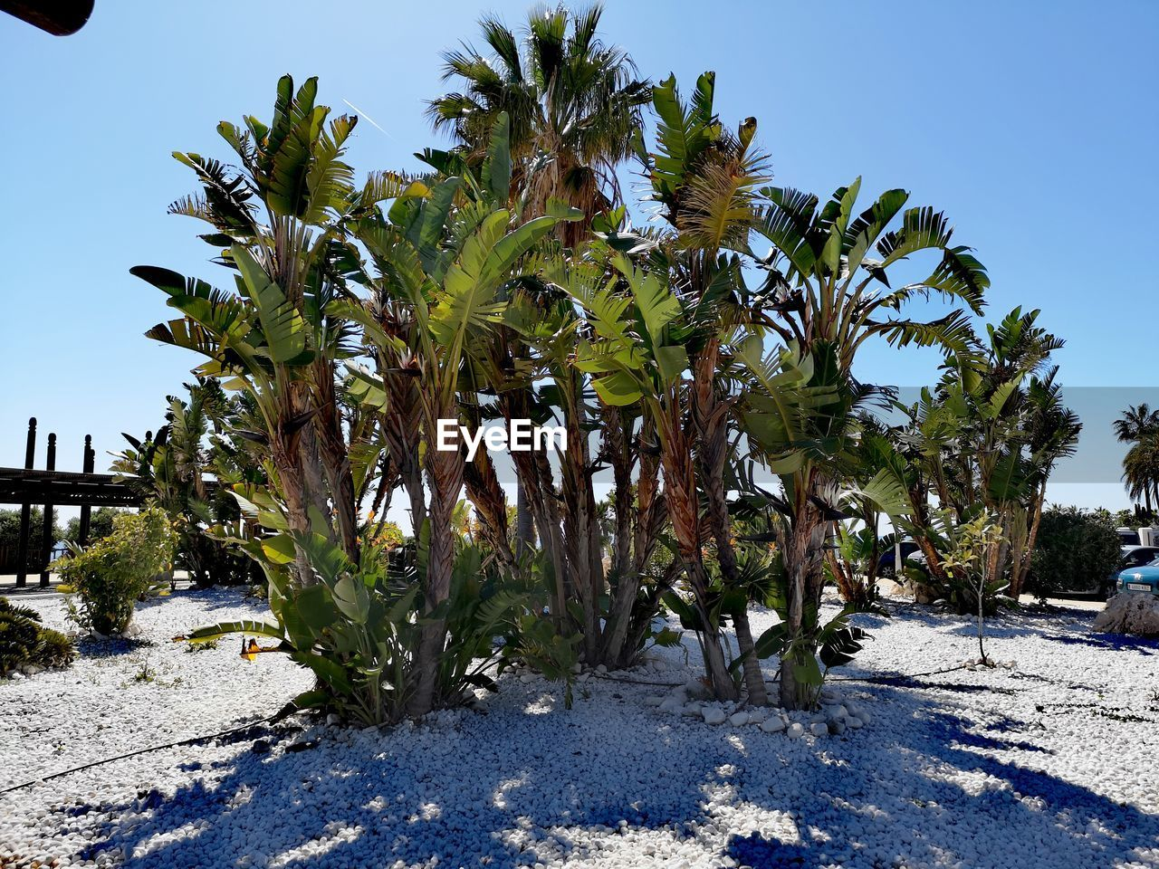 plant, growth, tree, sky, nature, day, sunlight, no people, beauty in nature, land, clear sky, field, outdoors, tranquility, green color, tropical climate, scenics - nature, tranquil scene, palm tree, blue