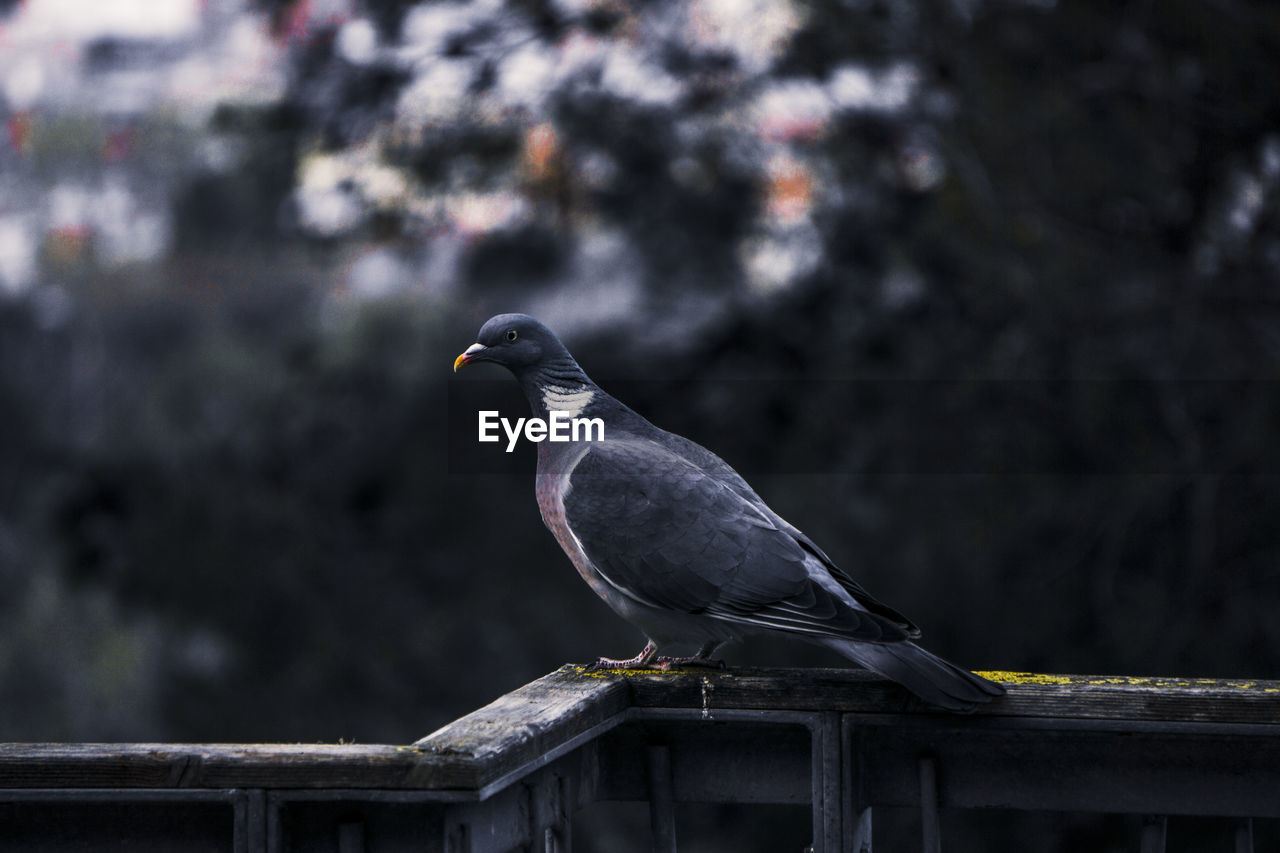 Bird perching on railing against blurred background