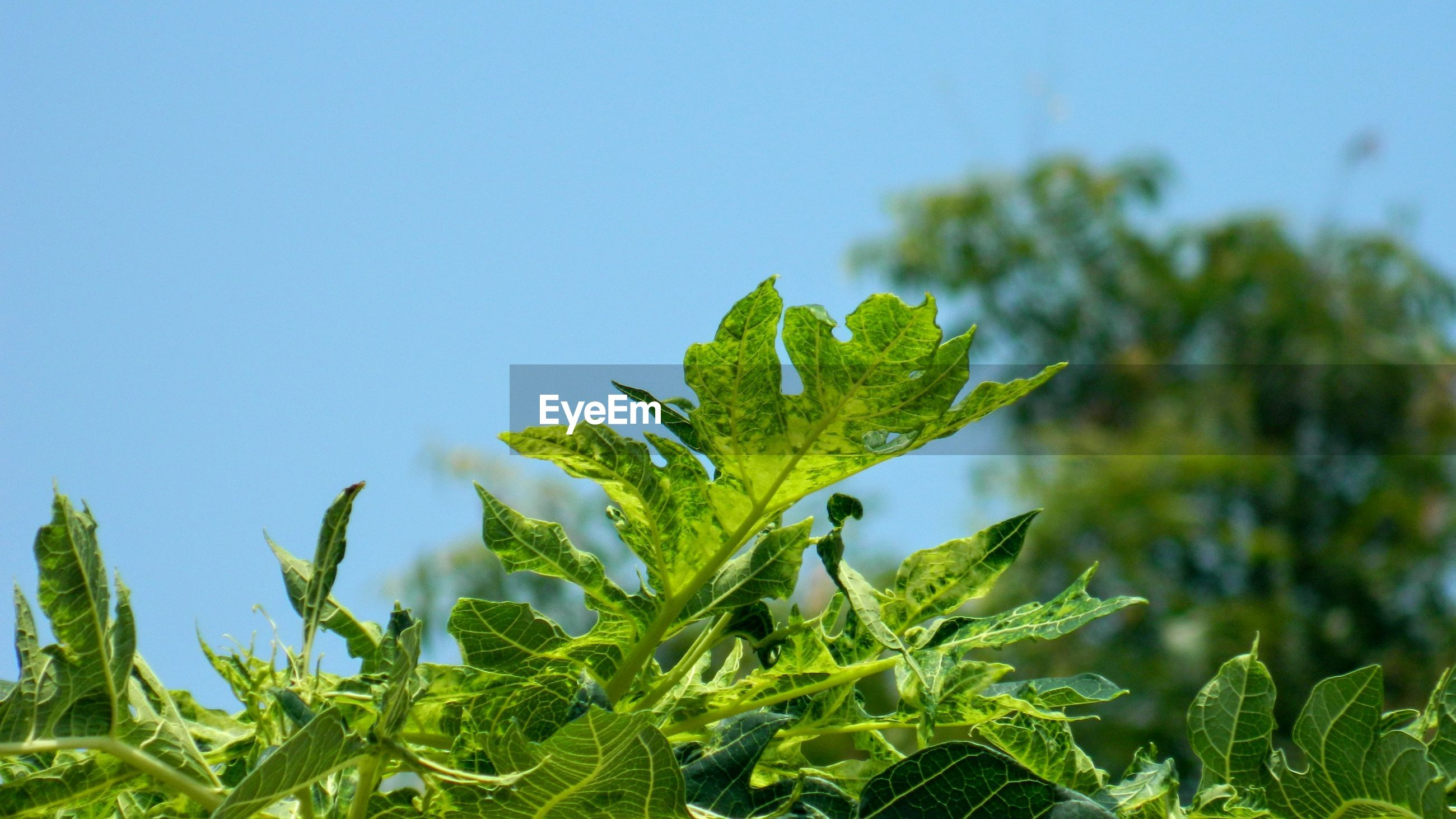 CLOSE-UP OF FRESH GREEN PLANTS AGAINST CLEAR SKY