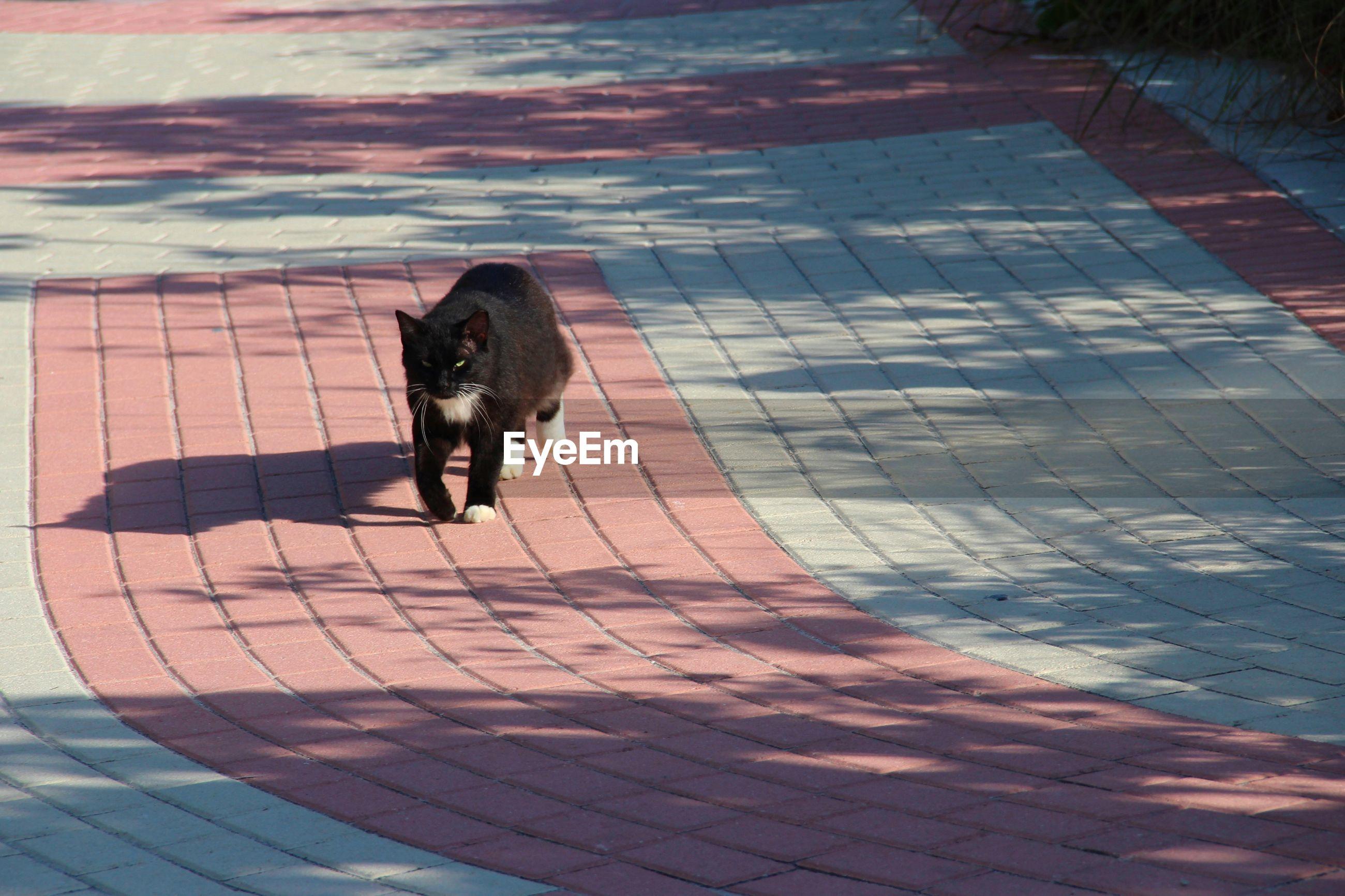 dog, one animal, blue, animal themes, animal, floor, flooring, pet, domestic animals, footpath, canine, mammal, road surface, high angle view, shadow, day, nature, sunlight, no people, paving stone, cat, outdoors, reflection, outdoor structure, full length, water, street, walking, stone, cobblestone