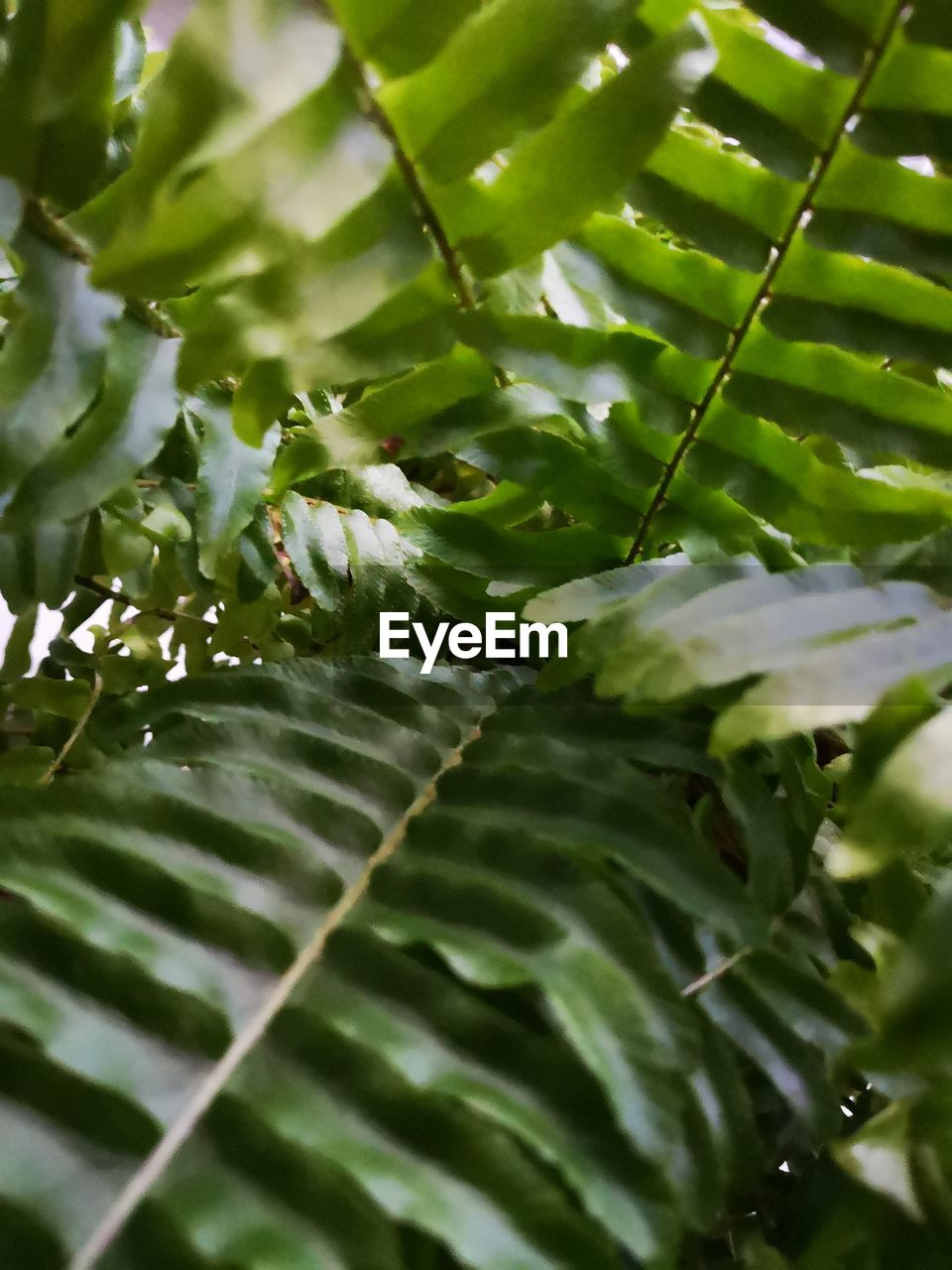green color, growth, leaf, plant, plant part, no people, beauty in nature, close-up, nature, day, selective focus, freshness, full frame, water, drop, backgrounds, wet, outdoors, tranquility, leaves, raindrop