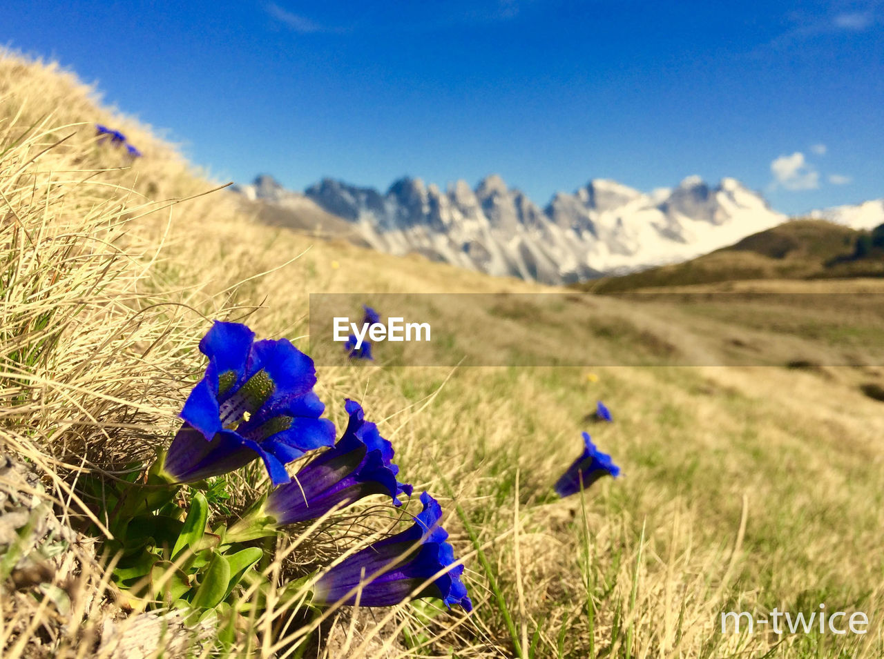 field, blue, nature, beauty in nature, real people, grass, day, landscape, growth, tranquility, tranquil scene, mountain, two people, outdoors, agriculture, men, scenics, women, rural scene, togetherness, flower, sky, mammal, people