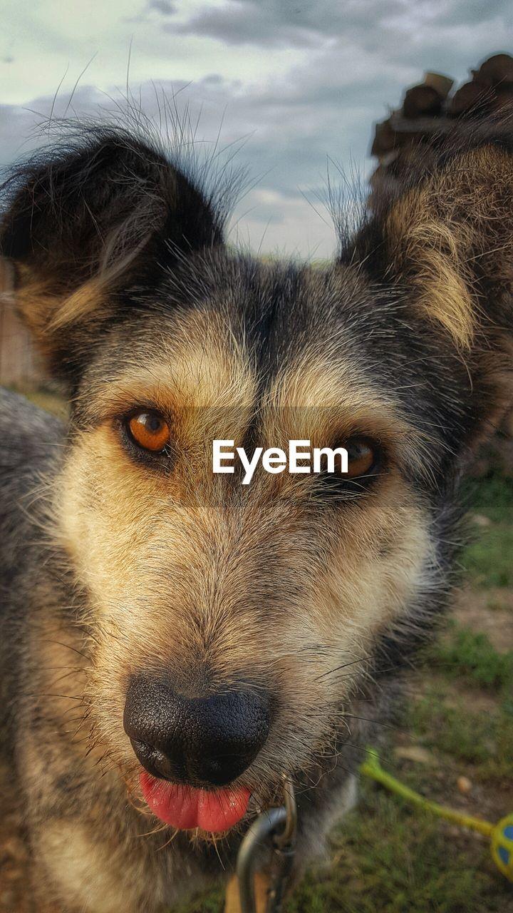 Close-Up Portrait Of Dog Against Sky