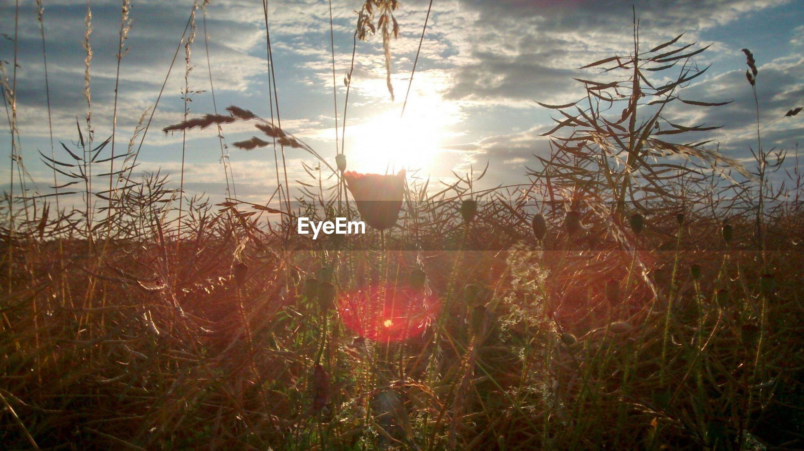 sun, grass, sky, tranquility, plant, beauty in nature, nature, tranquil scene, sunset, sunlight, field, growth, sunbeam, scenics, water, lake, lens flare, cloud - sky, landscape, outdoors