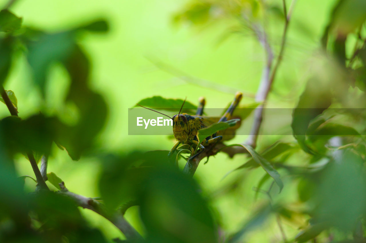 animal wildlife, animals in the wild, animal themes, animal, invertebrate, one animal, insect, plant, selective focus, green color, plant part, leaf, growth, no people, day, close-up, nature, beauty in nature, tree, outdoors