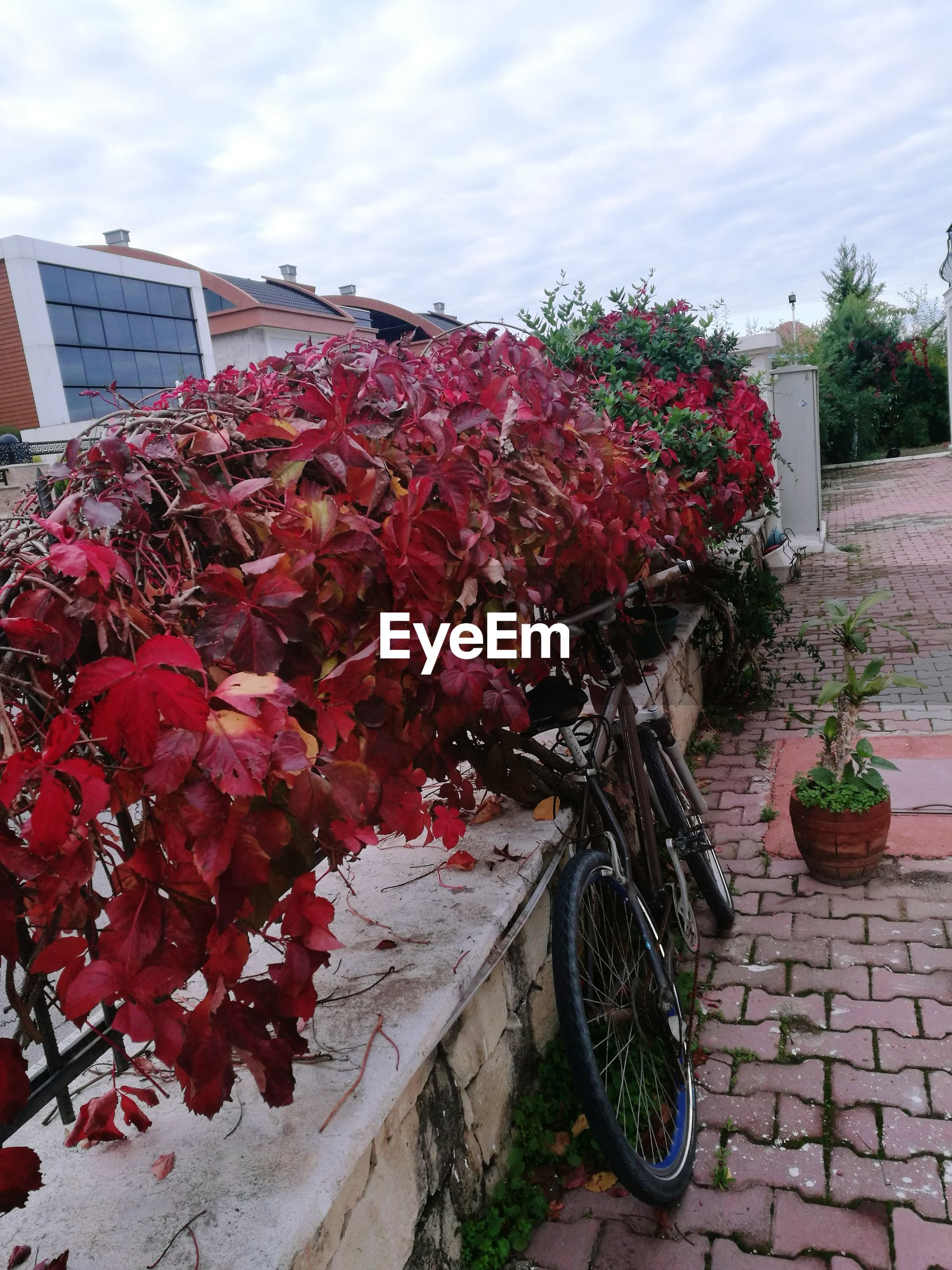 flower, bicycle, outdoors, building exterior, growth, plant, fragility, nature, built structure, day, architecture, land vehicle, beauty in nature, petal, freshness, transportation, leaf, red, no people, sky, flower head