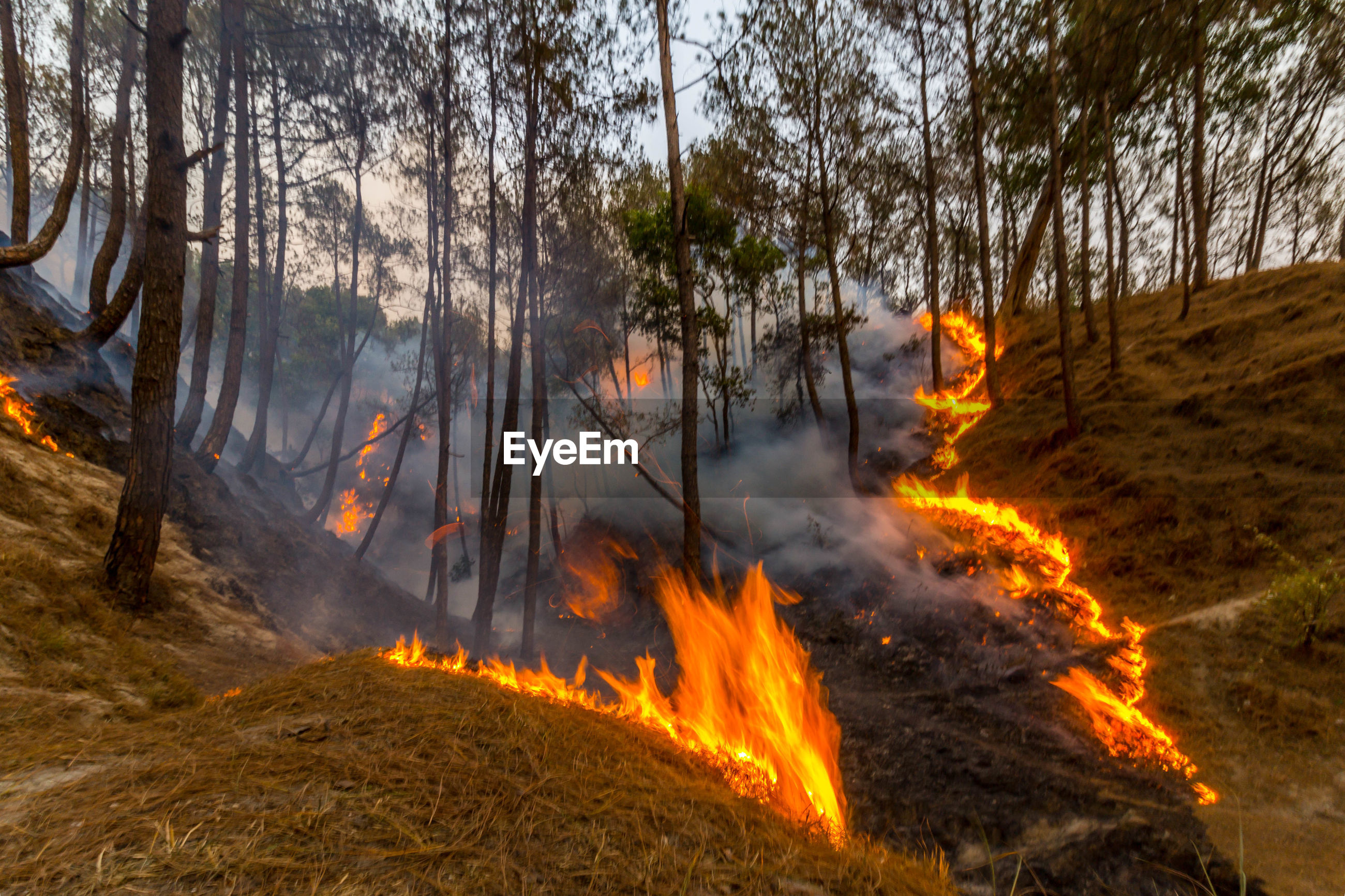 View of forest fire
