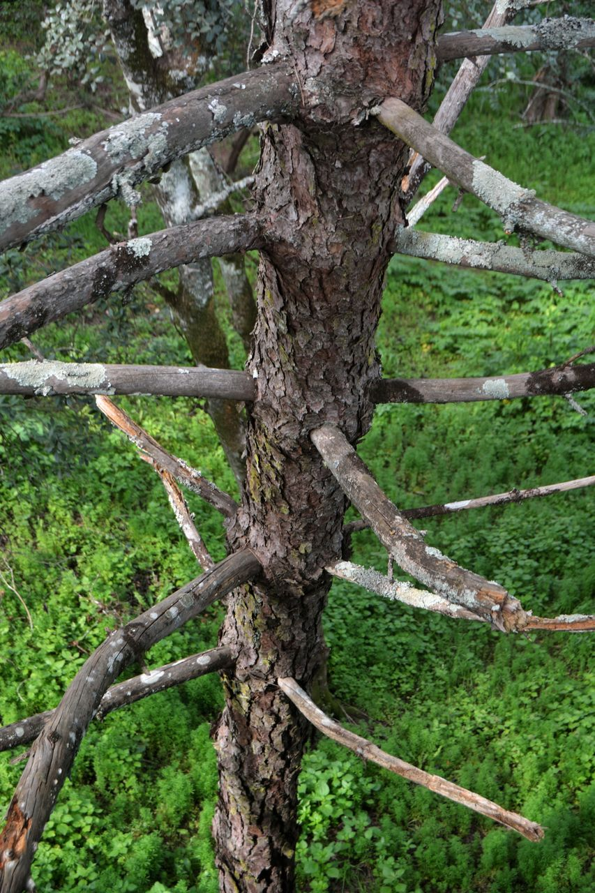 tree, tree trunk, nature, no people, day, green color, outdoors, growth, scenics, beauty in nature, branch, close-up, sky