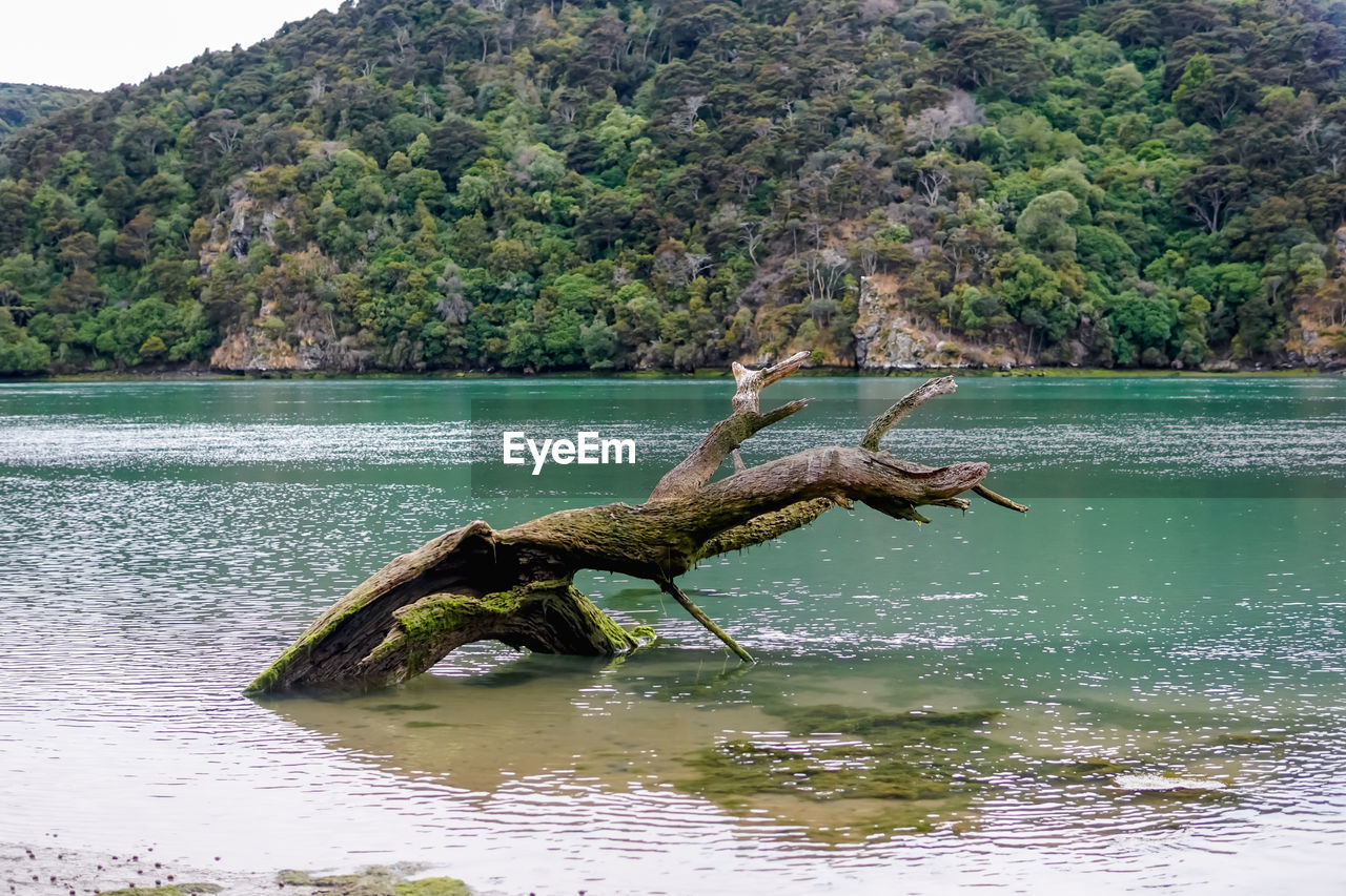 water, tree, beauty in nature, scenics - nature, plant, tranquility, tranquil scene, nature, day, sea, waterfront, non-urban scene, no people, idyllic, outdoors, reflection, land, forest, driftwood, turquoise colored